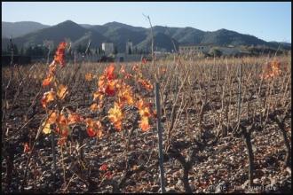2005_Barcelone-37.jpg
