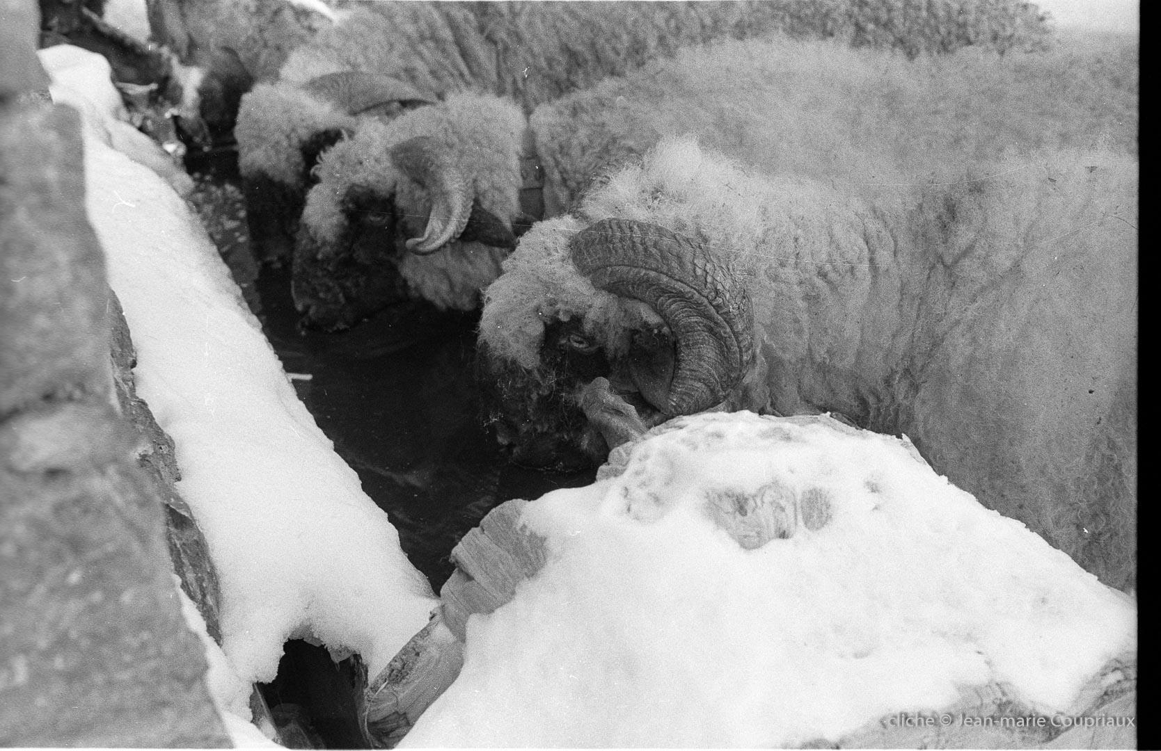 1978_Zermatt-nb-5