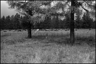 1975_SLOV-nb-22.jpg