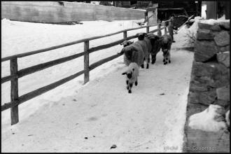 1978_Zermatt-nb-8.jpg