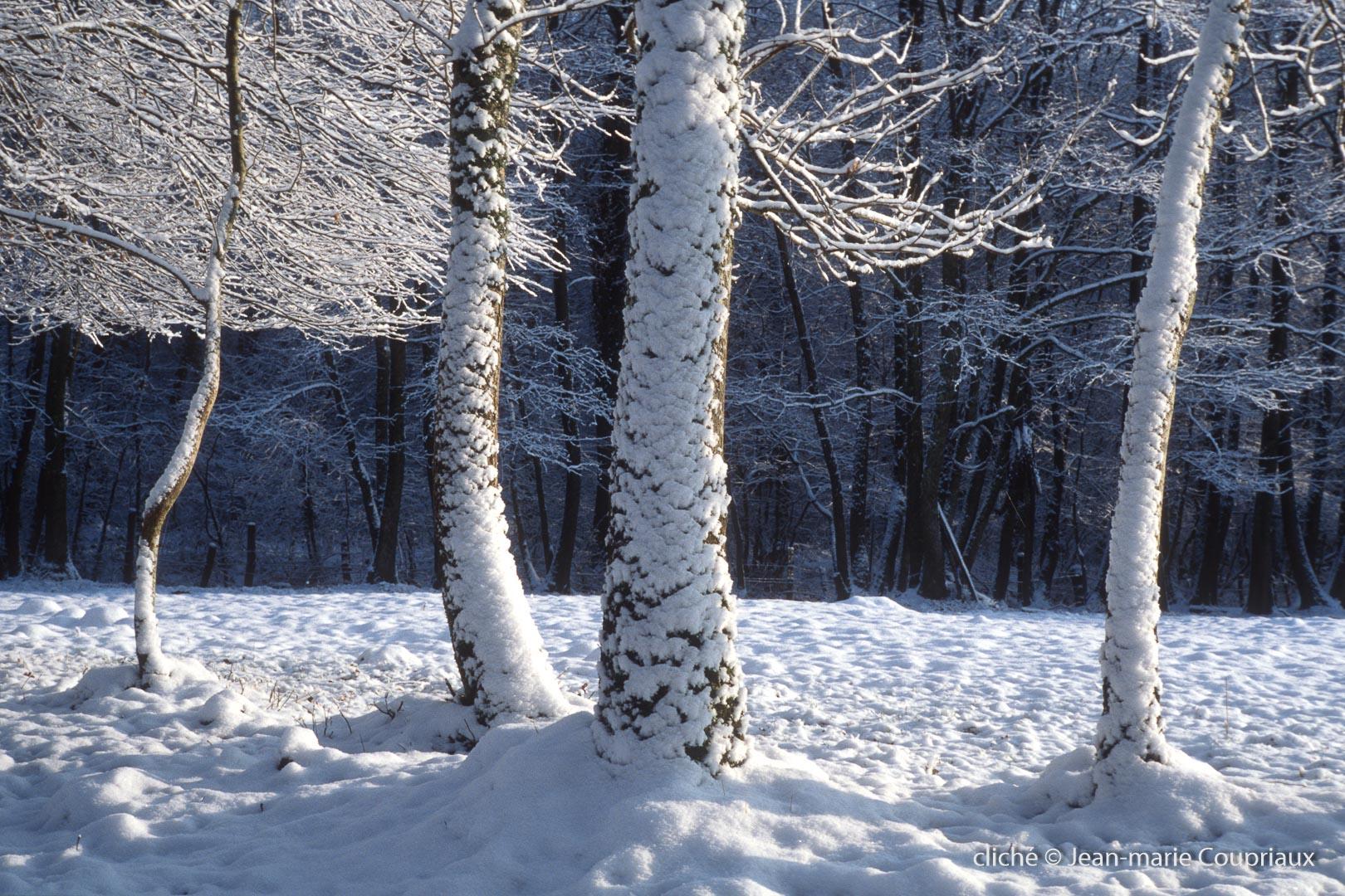 020_Nature-Menoux-19