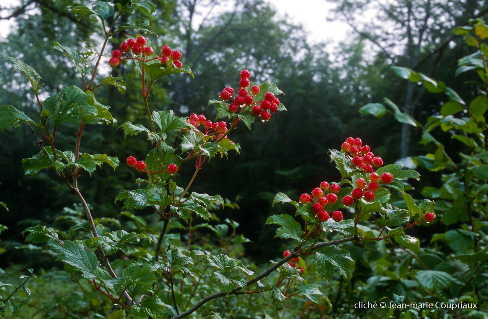 045_Nature-Menoux-35