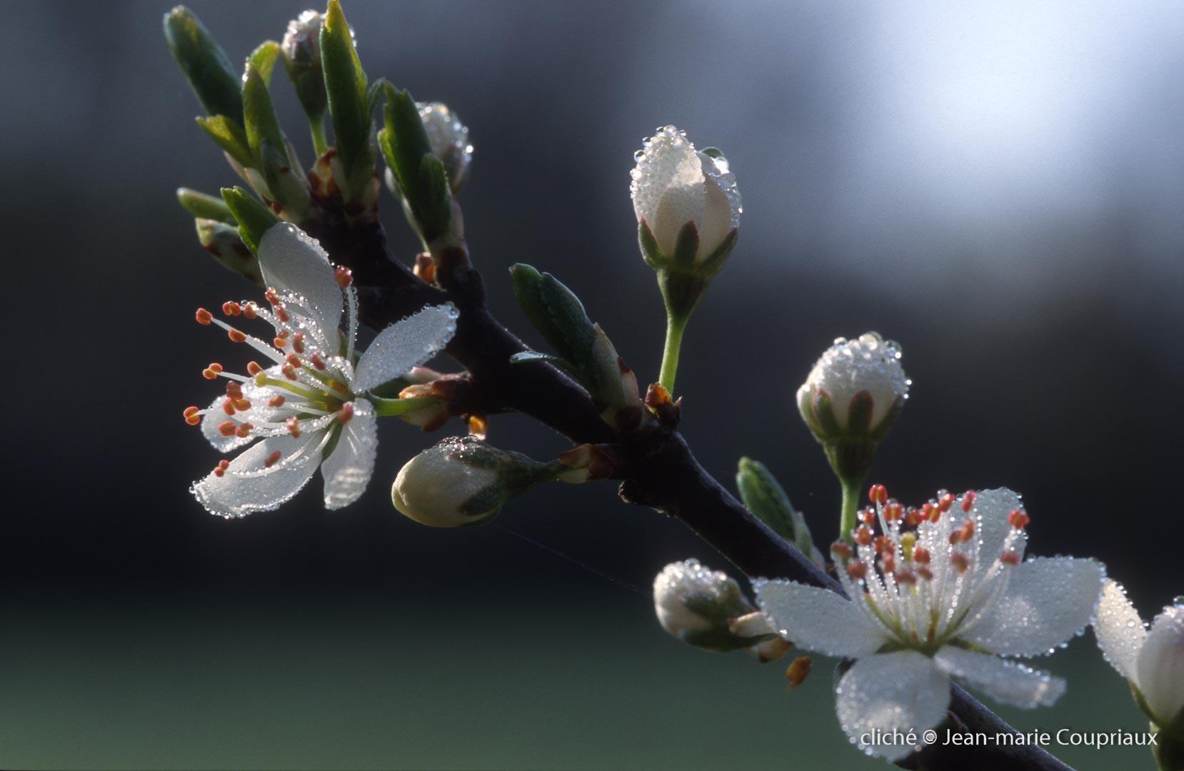 062_Nature-Menoux-54