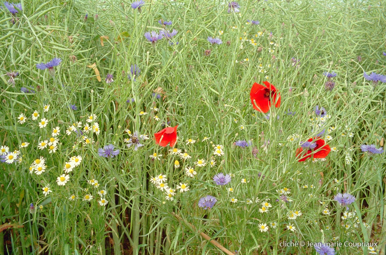 1999_divers-fleurs-28