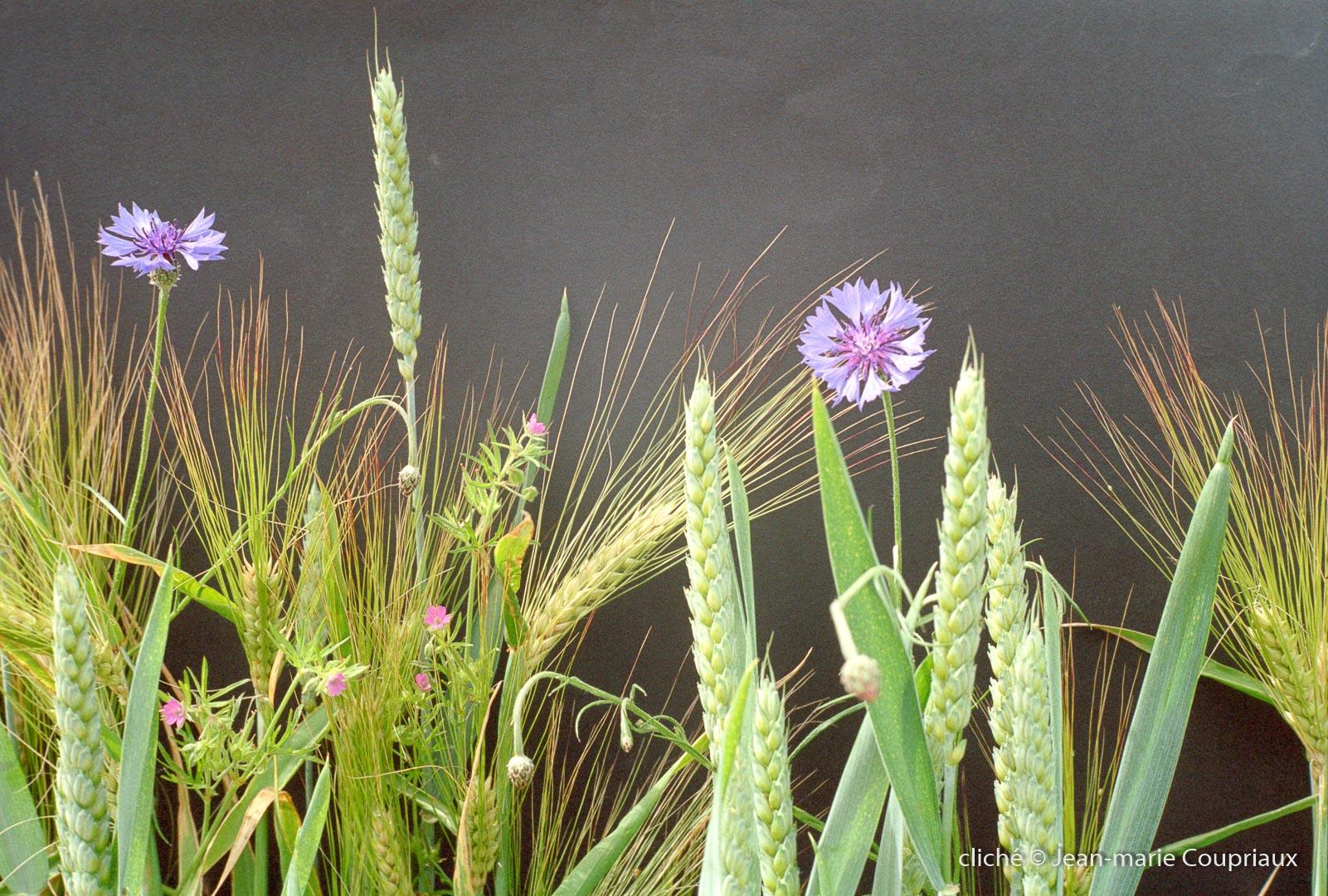 1999_divers-fleurs-31