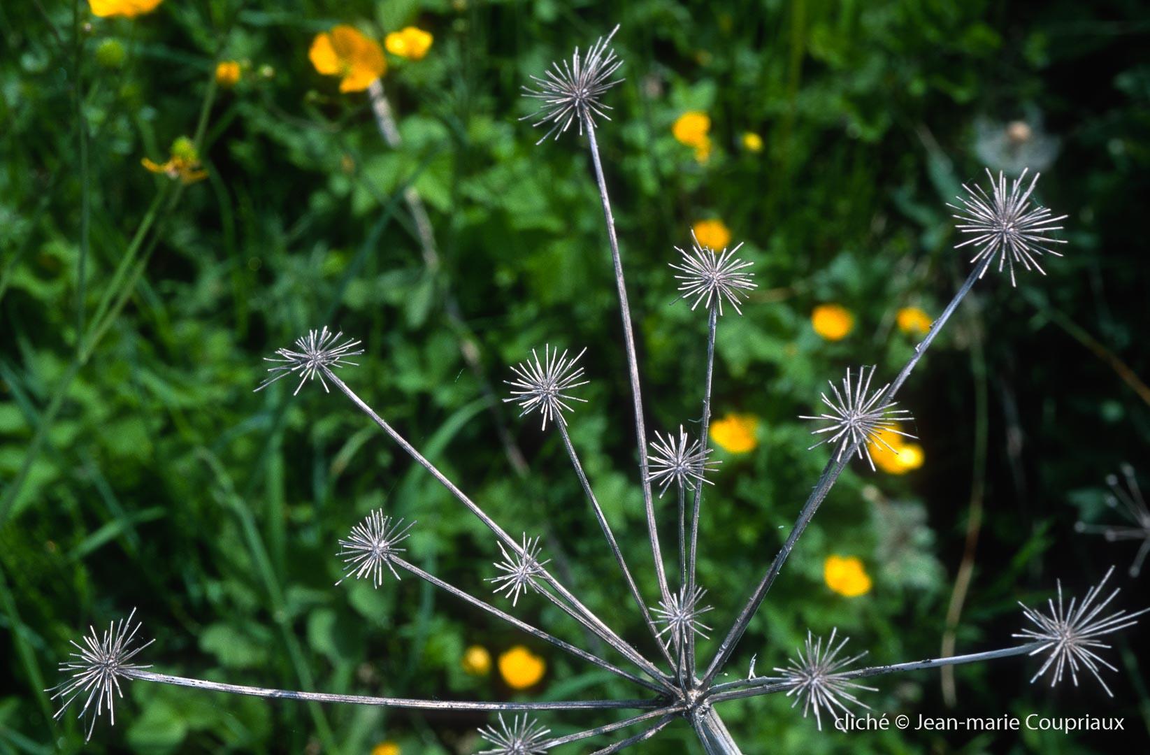 Fleurs-Art-26.jpg