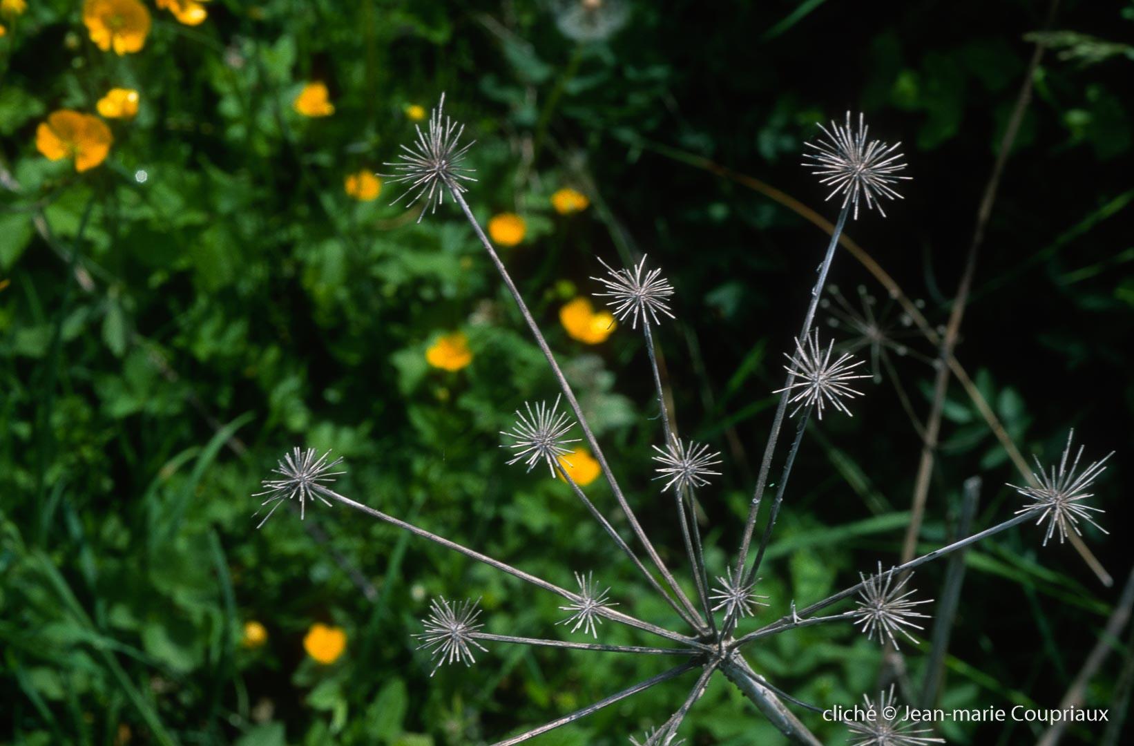 Fleurs-Art-27.jpg