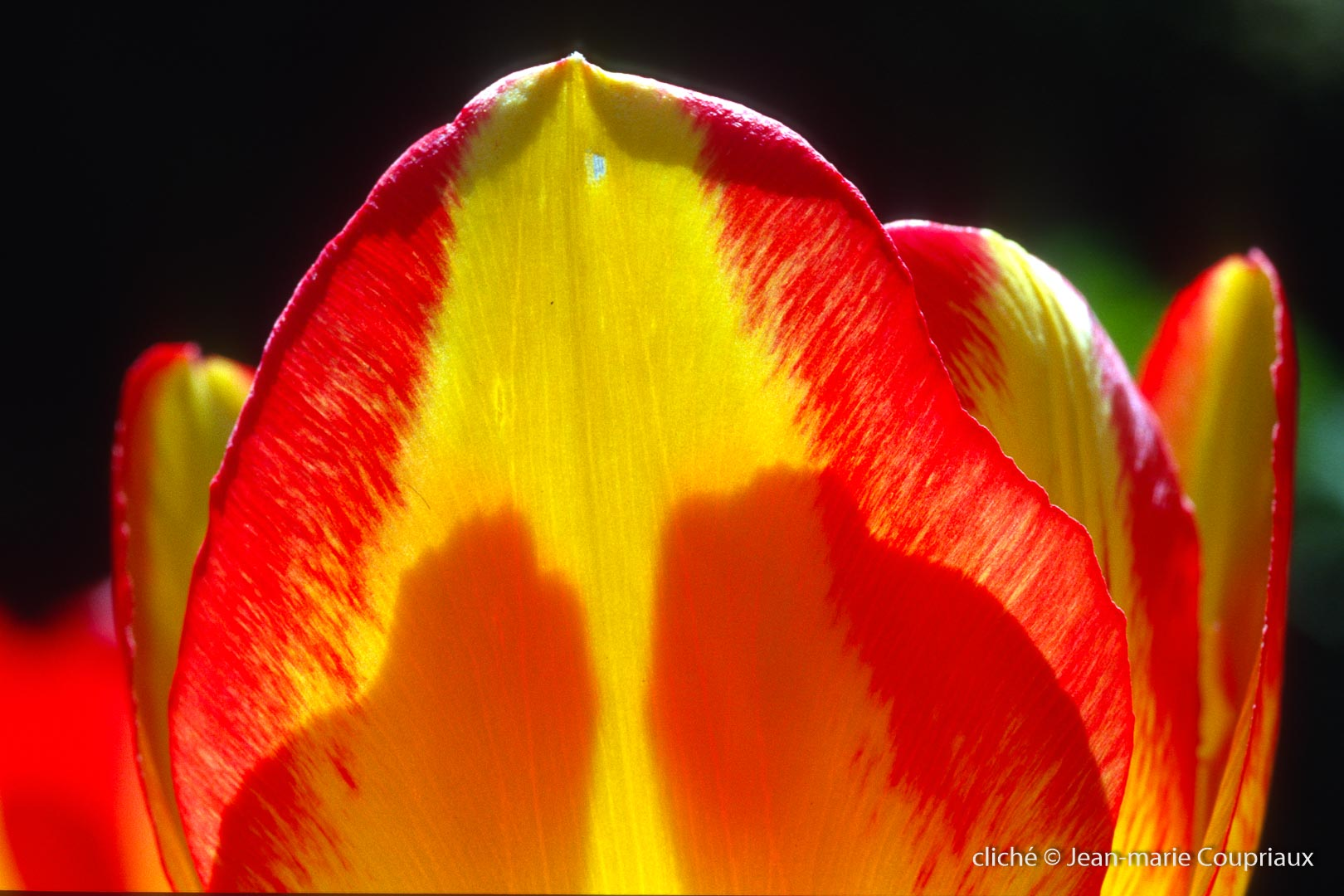 Fleurs-div-119