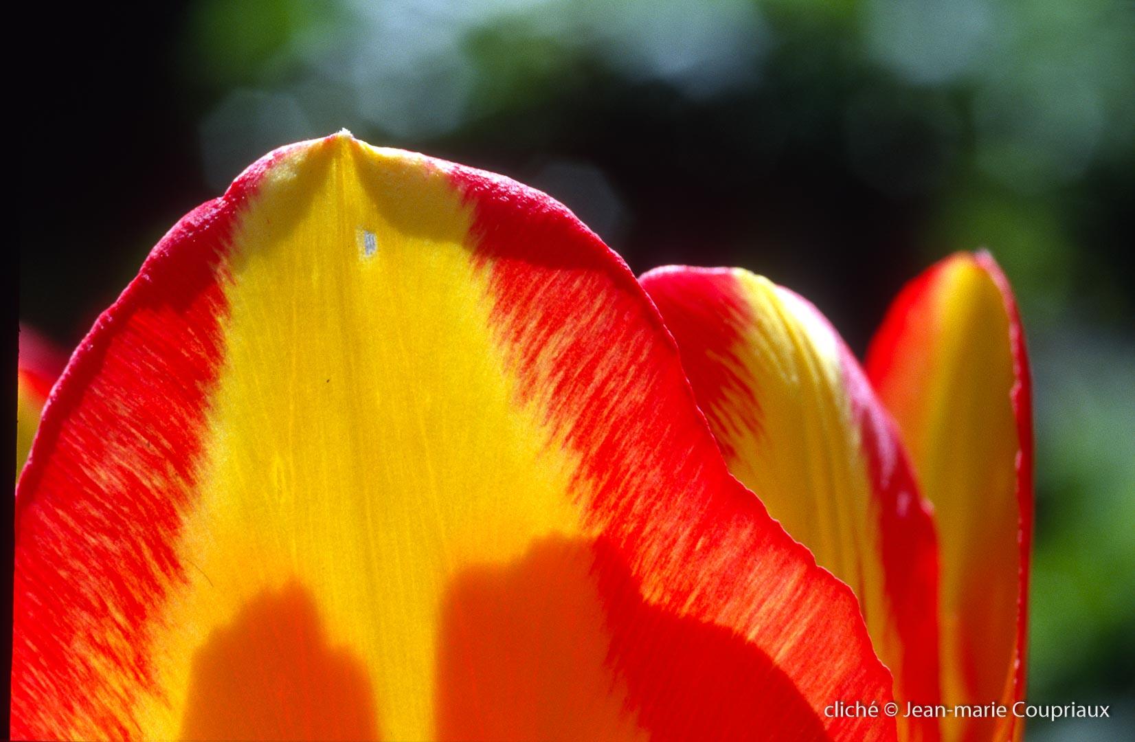 Fleurs-div-120.jpg