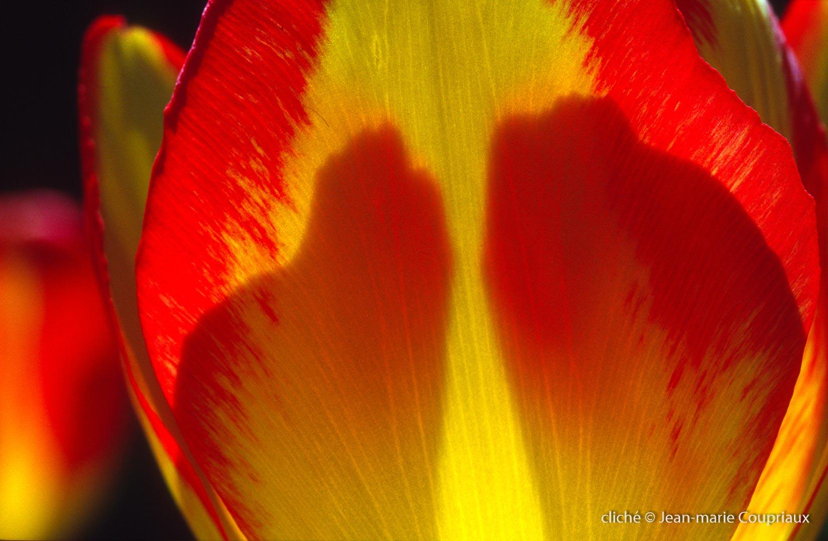 Fleurs-div-121.jpg