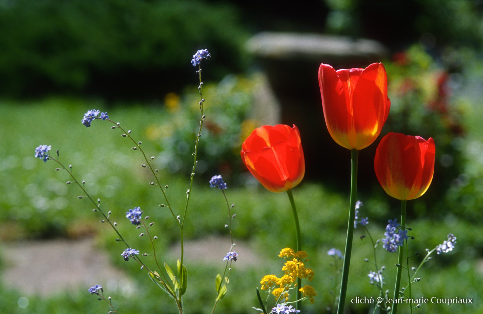 Fleurs-div-125.jpg