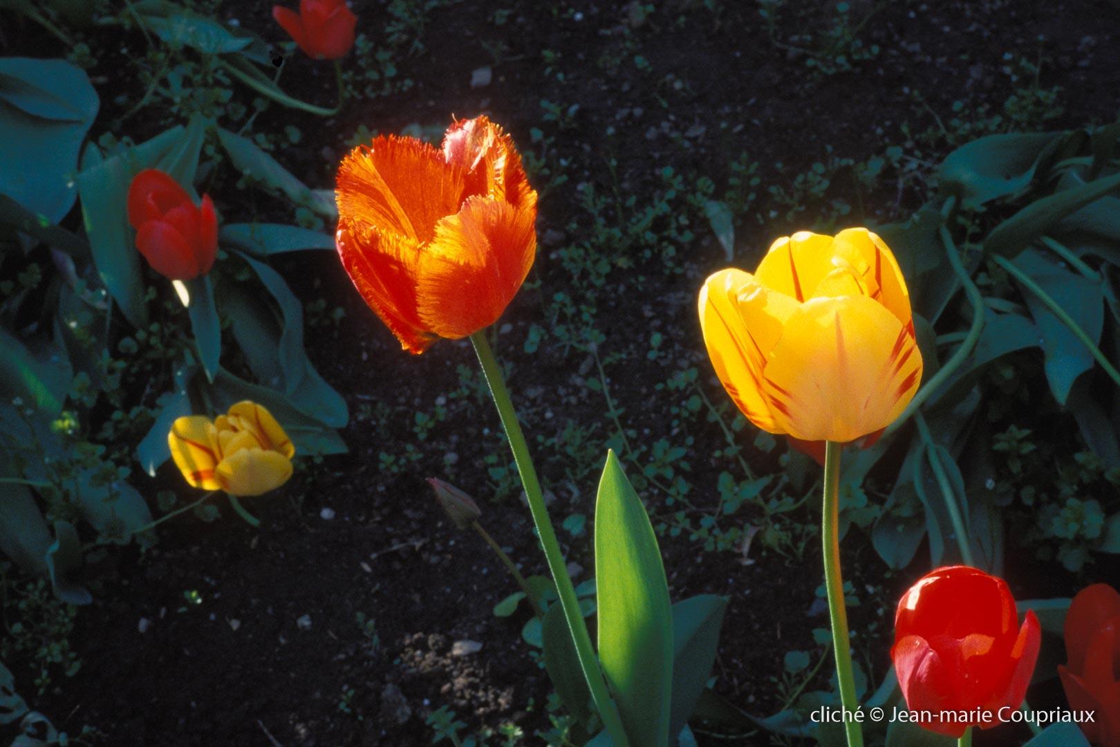 Fleurs-div-129