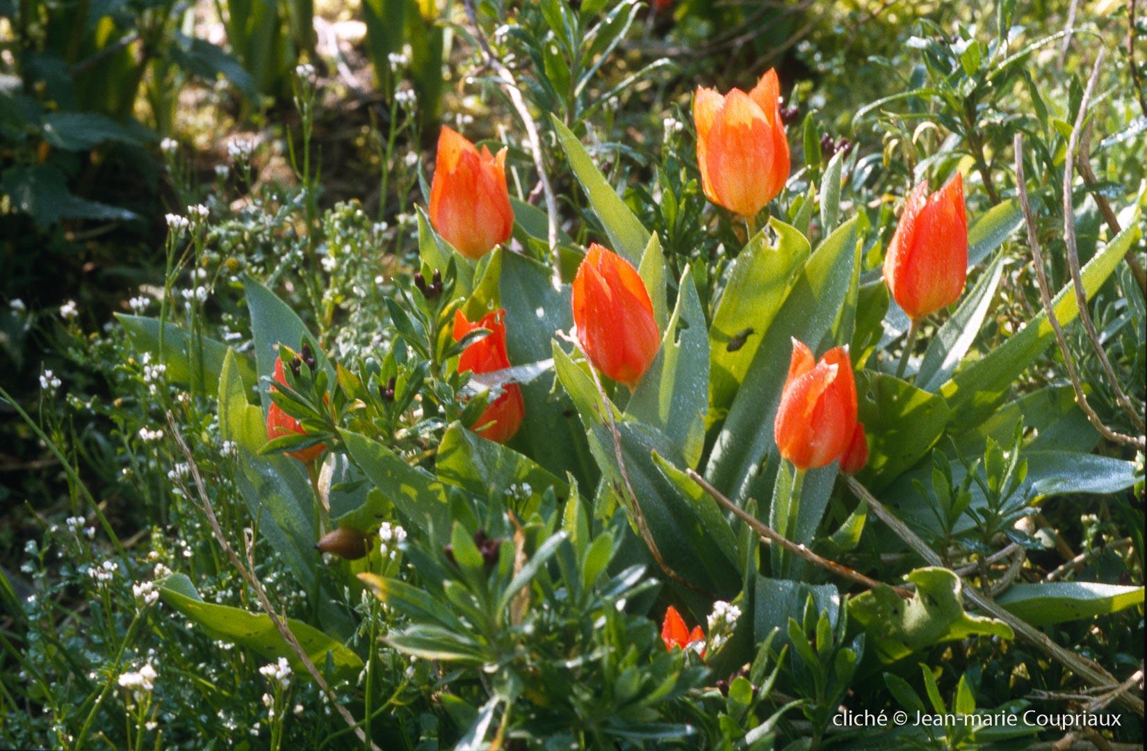 Fleurs-div-132