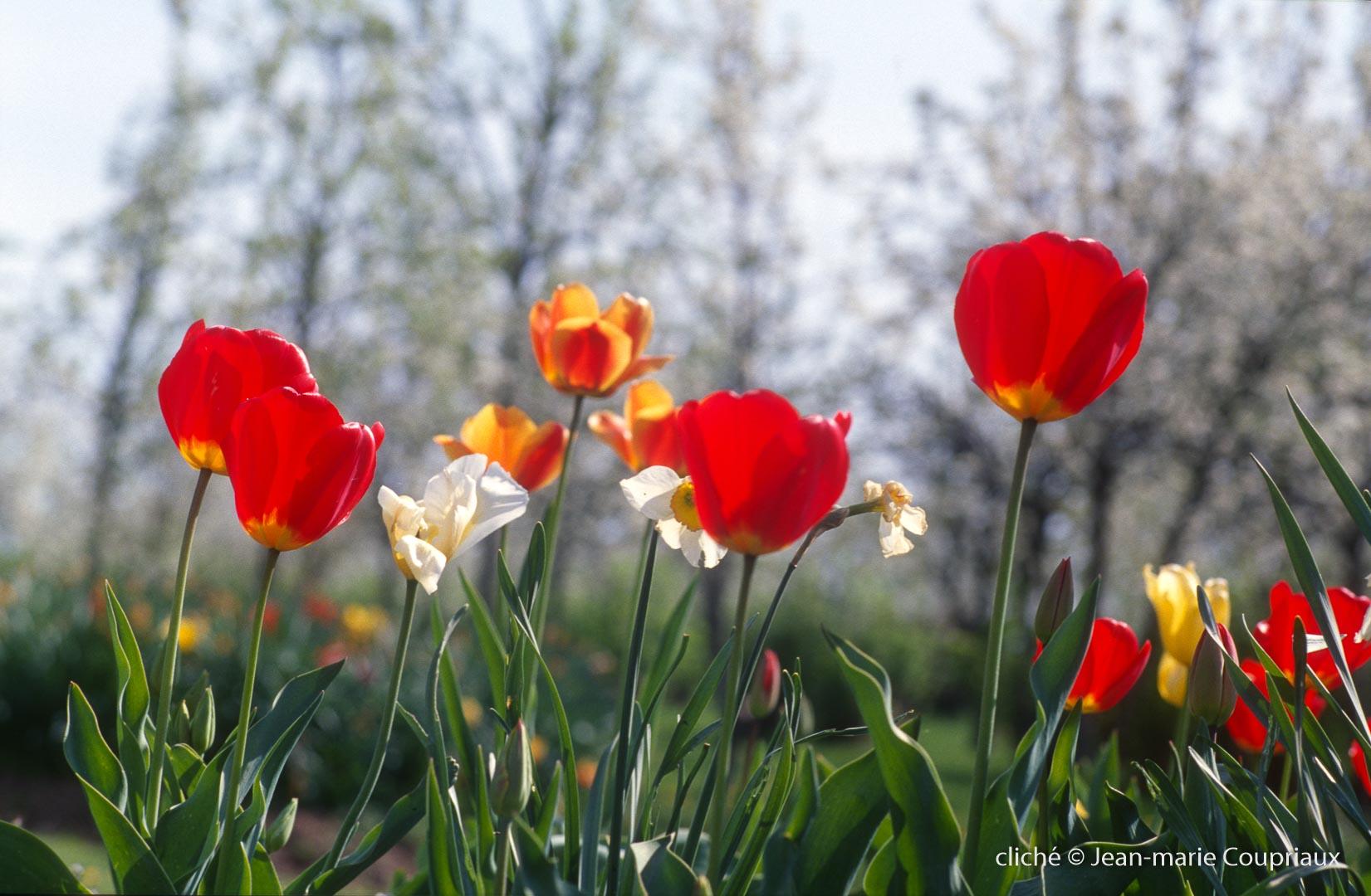 Fleurs-div-134