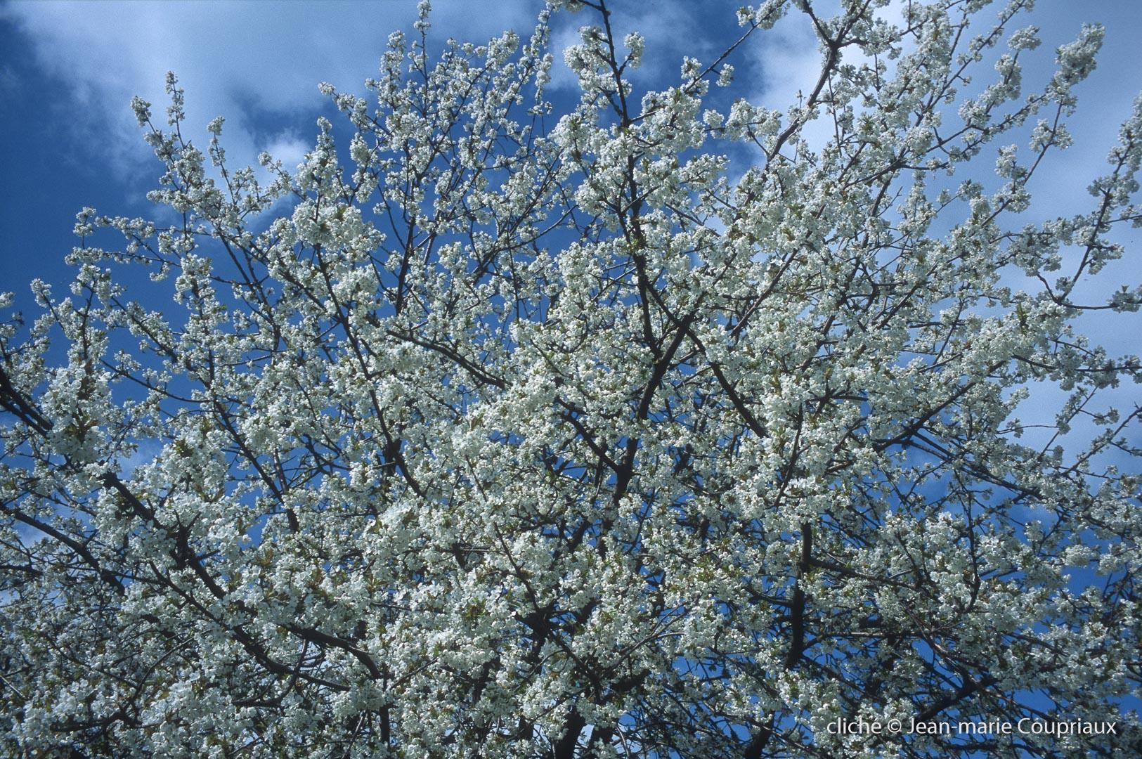 Fleurs-div-151.jpg