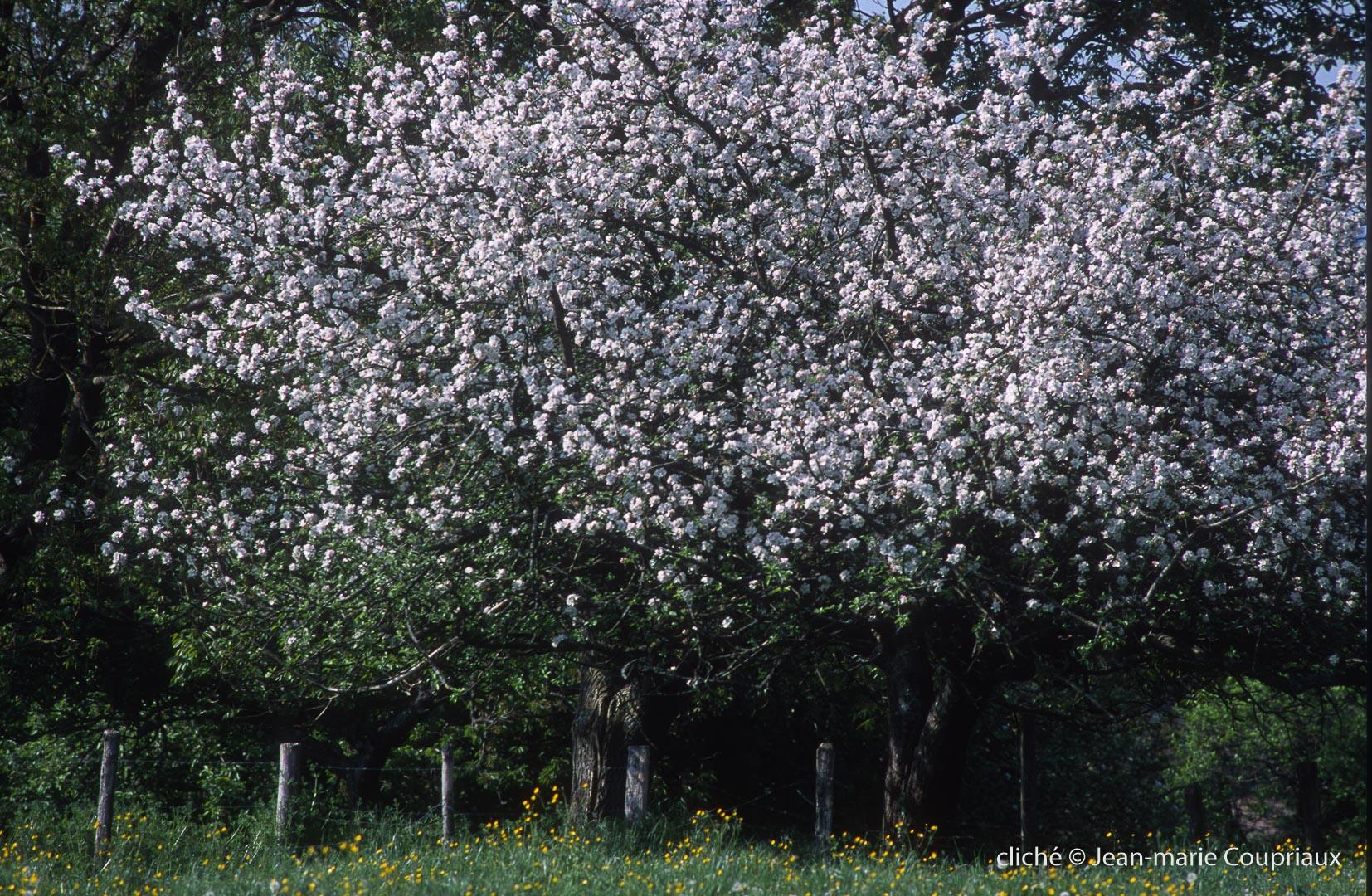 Fleurs-div-153