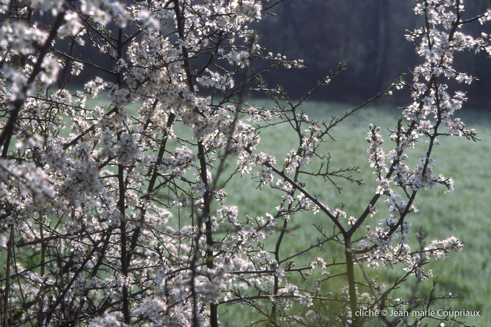 Fleurs-div-155.jpg