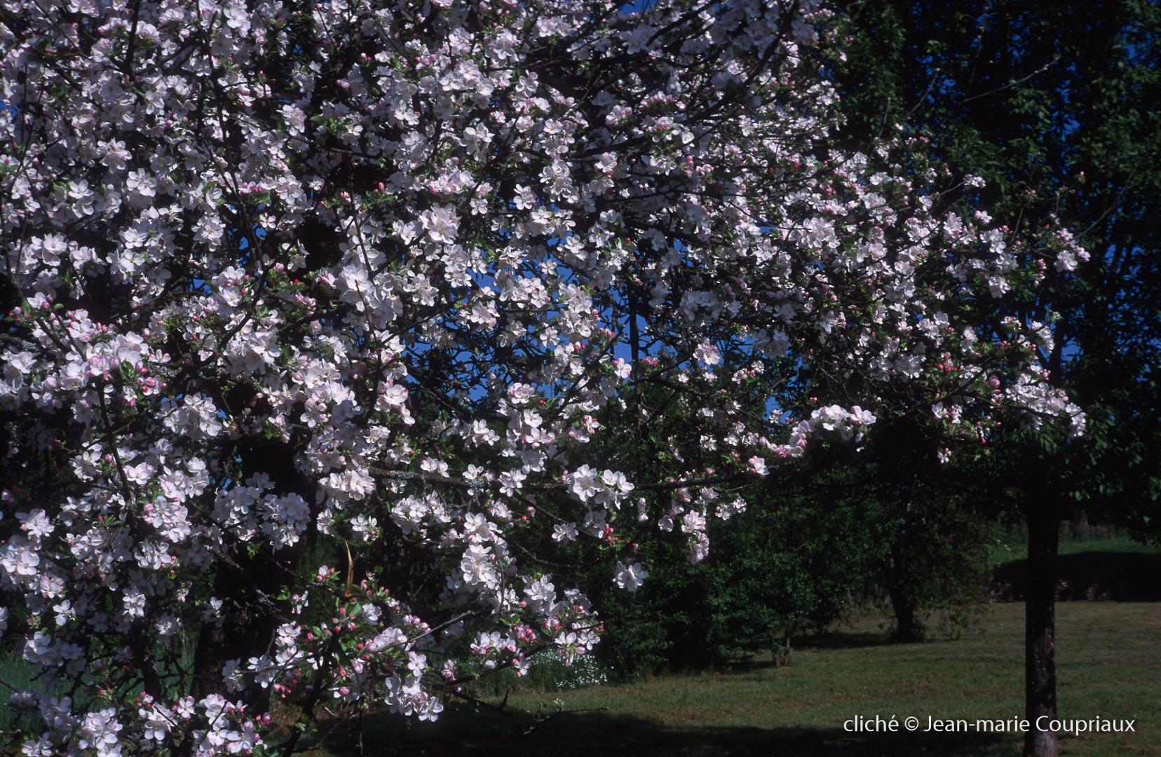Fleurs-div-158