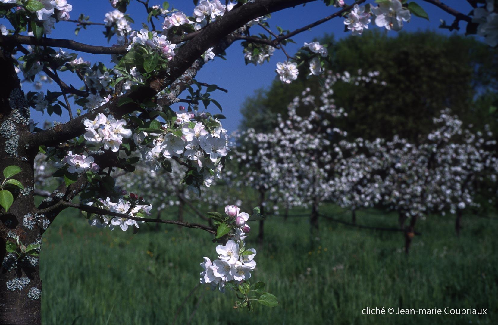 Fleurs-div-160.jpg