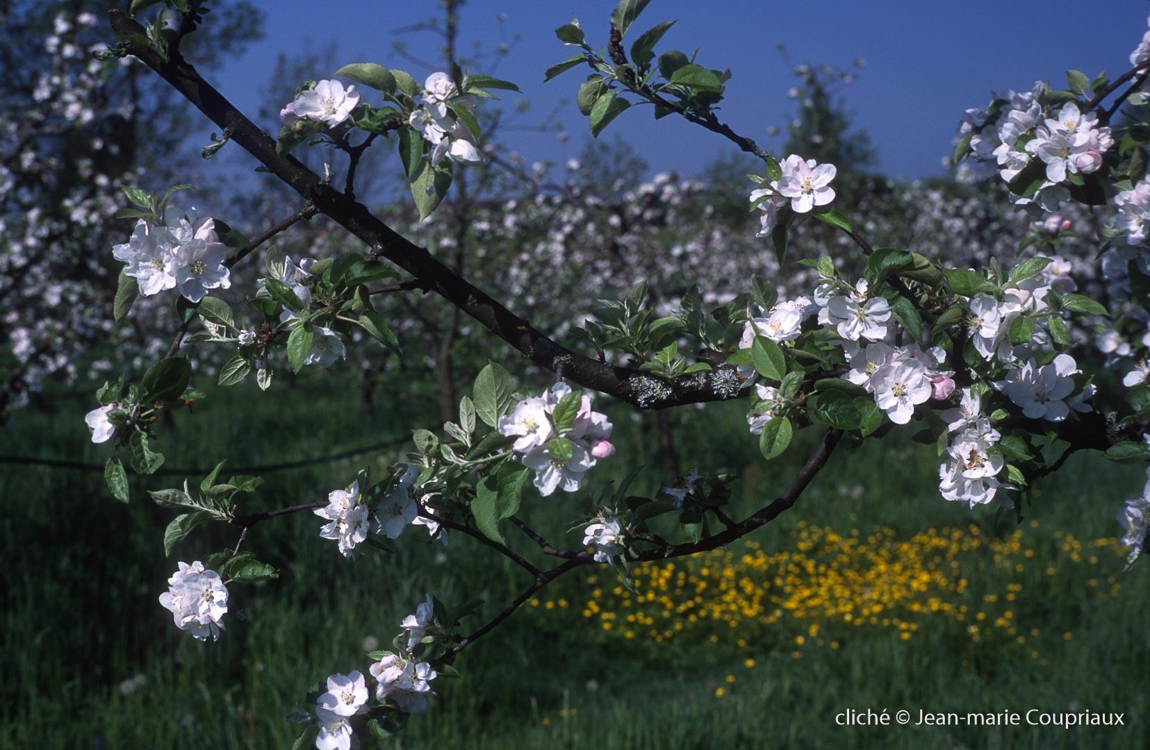 Fleurs-div-161