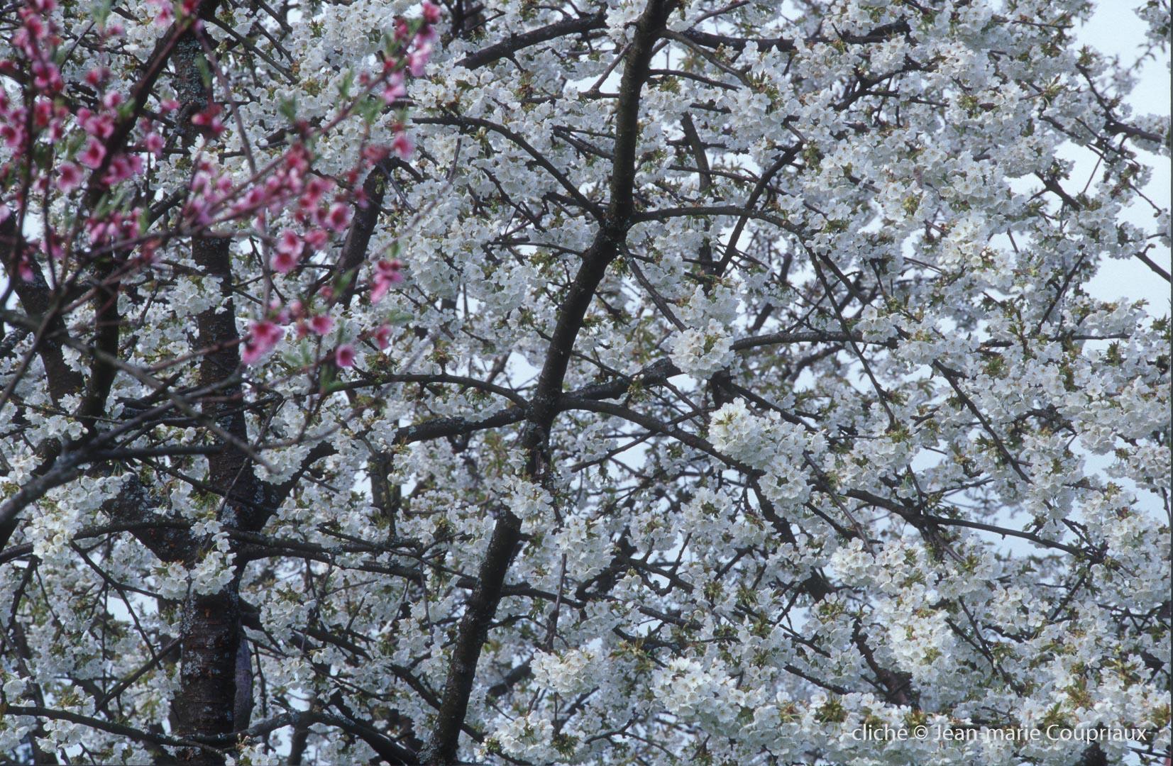 Fleurs-div-162-1.jpg