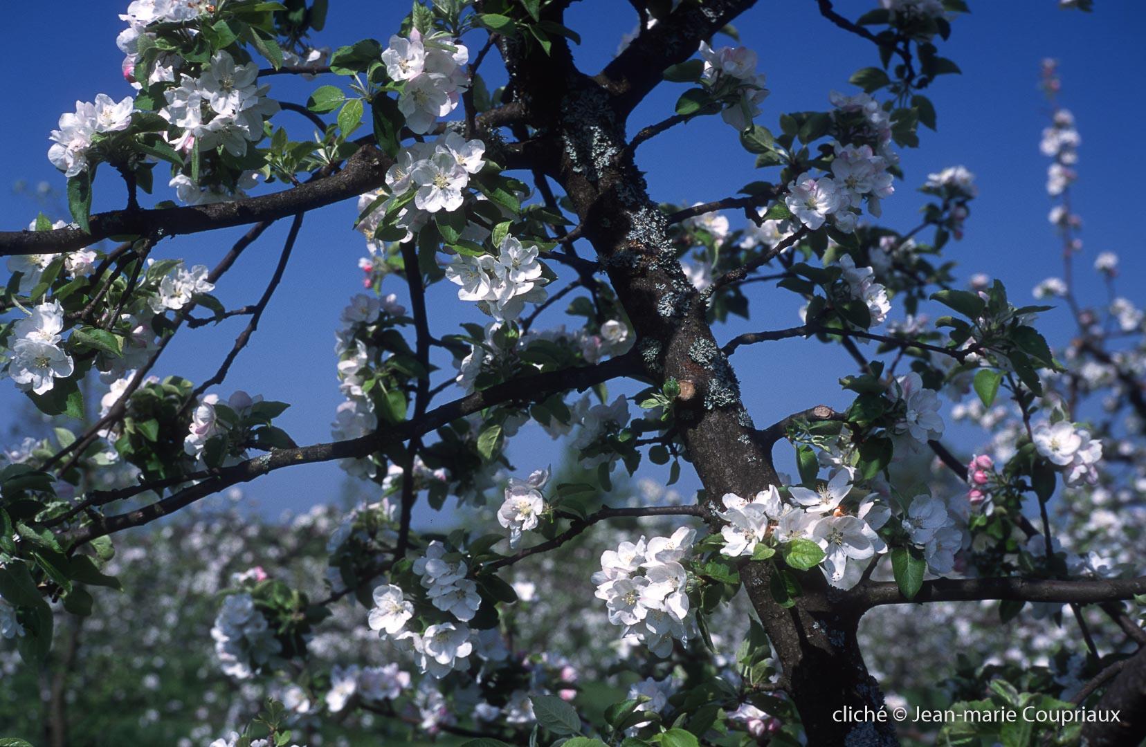 Fleurs-div-162.jpg