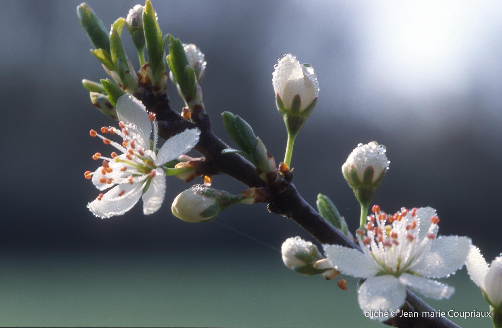 Fleurs-div-165