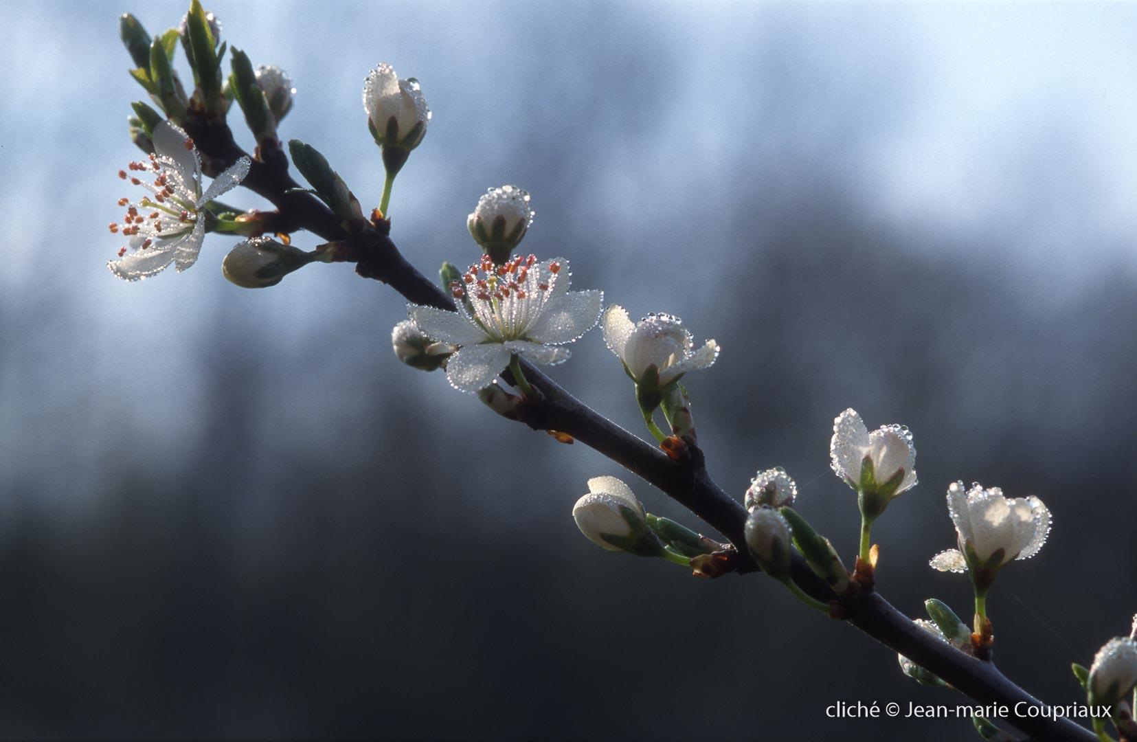 Fleurs-div-167.jpg