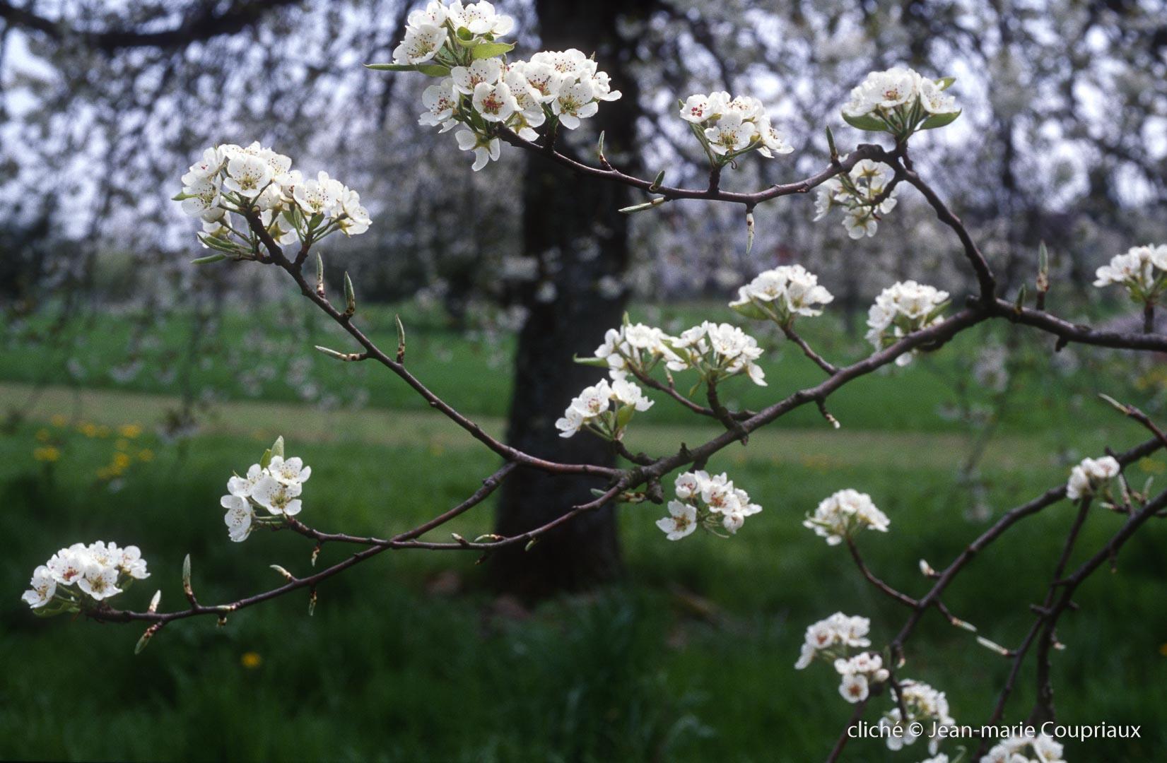 Fleurs-div-169