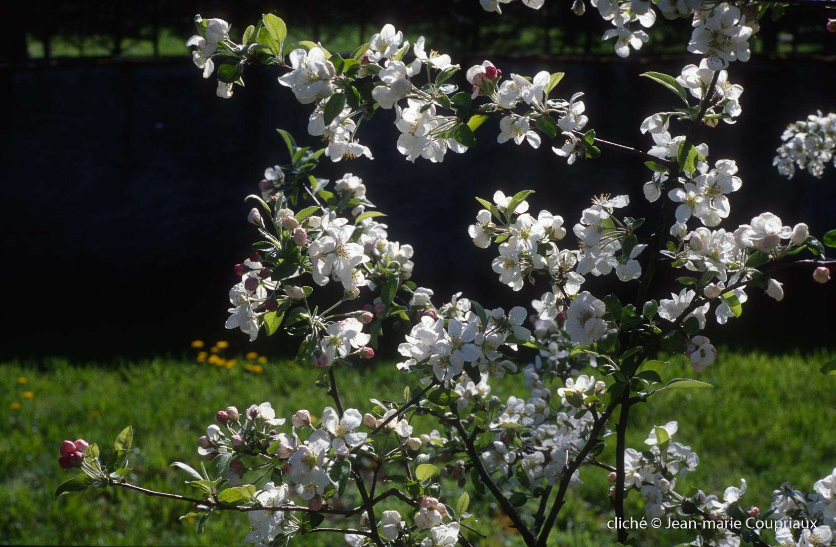 Fleurs-div-170