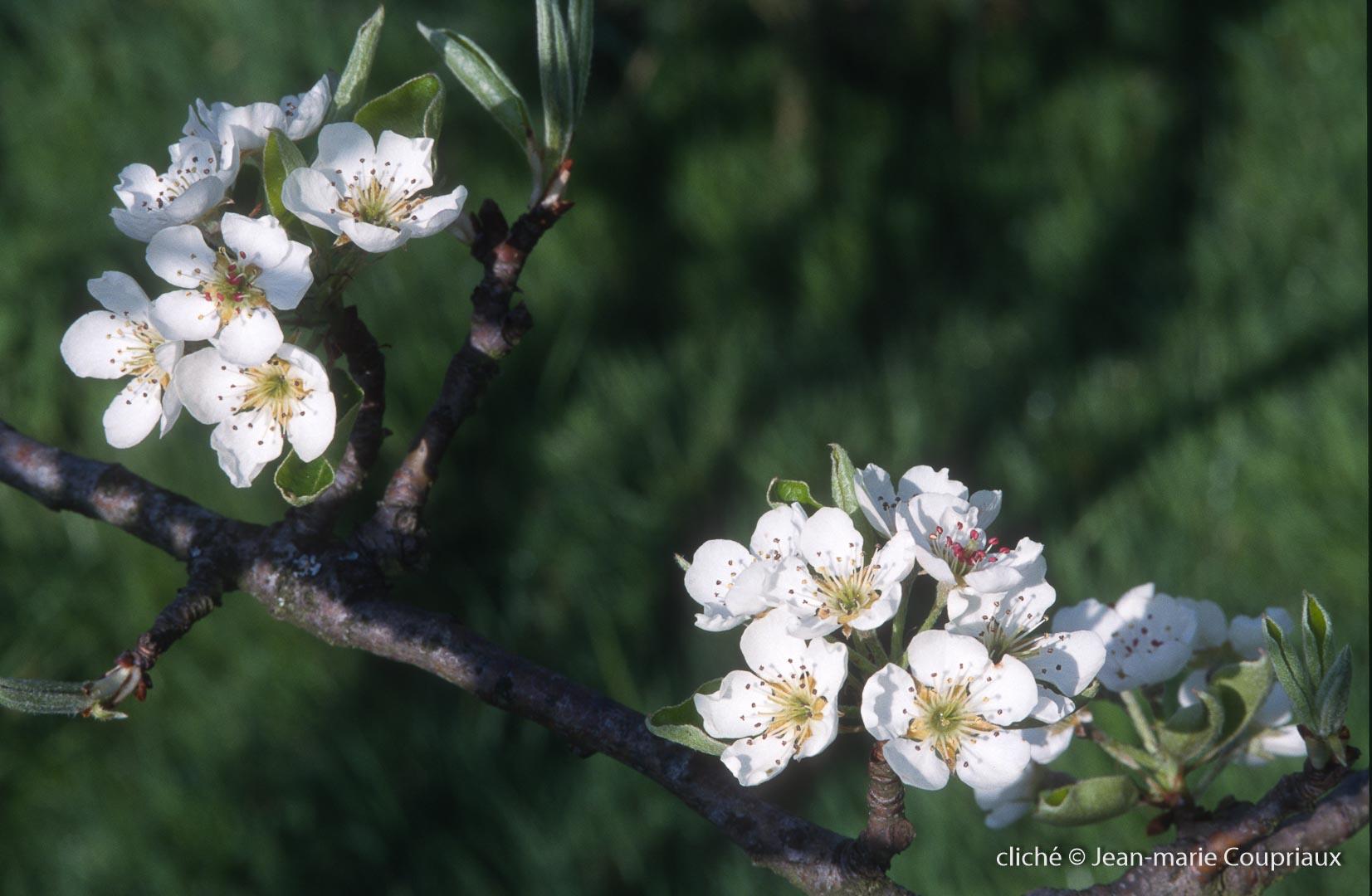 Fleurs-div-171.jpg