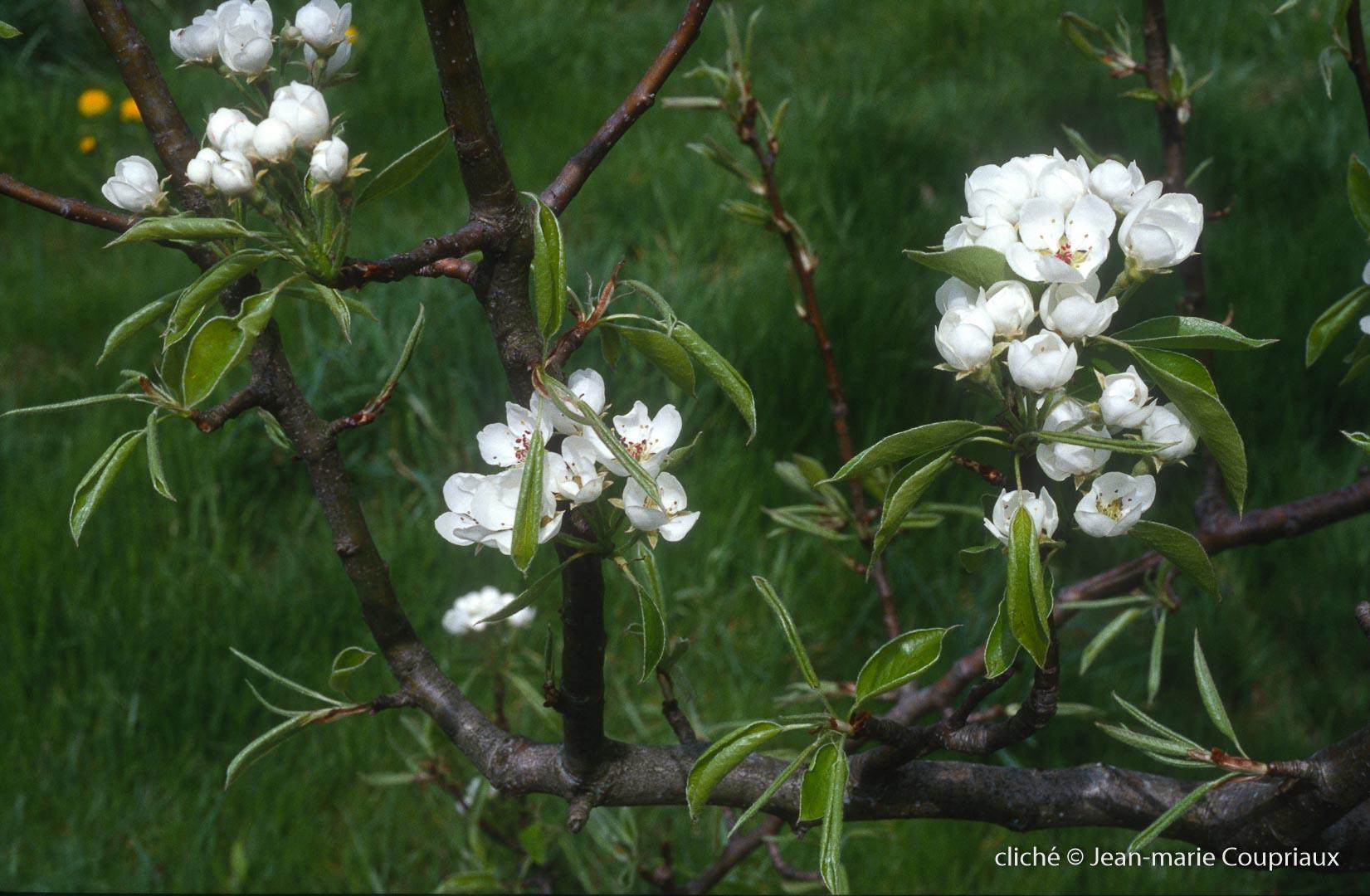 Fleurs-div-172.jpg