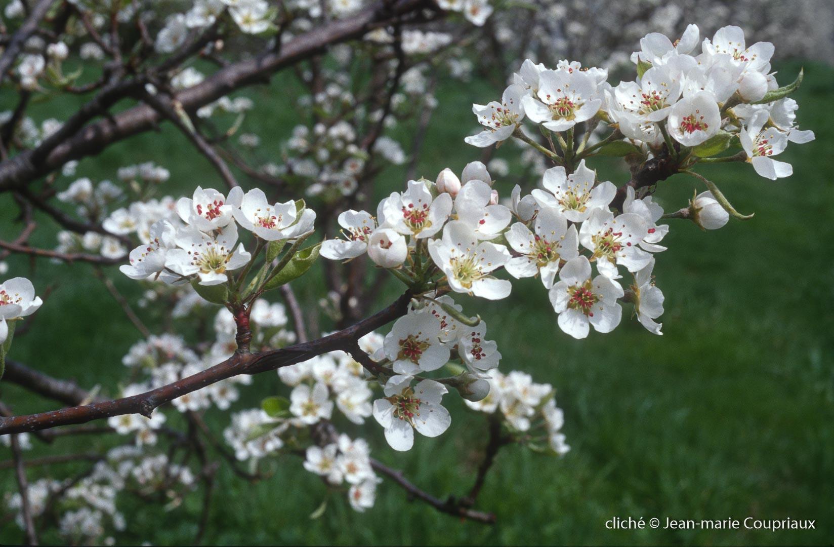 Fleurs-div-175.jpg