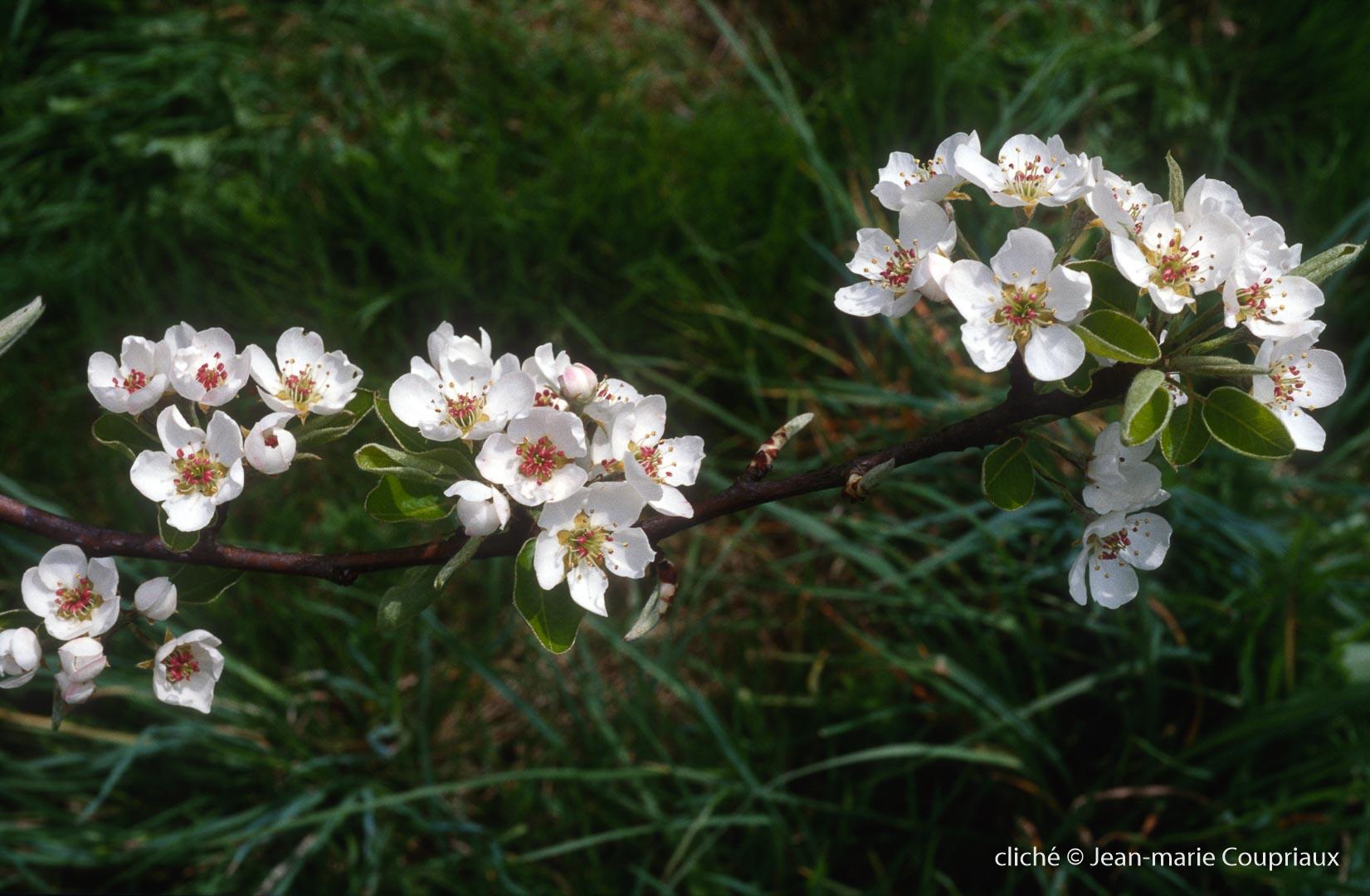 Fleurs-div-176.jpg