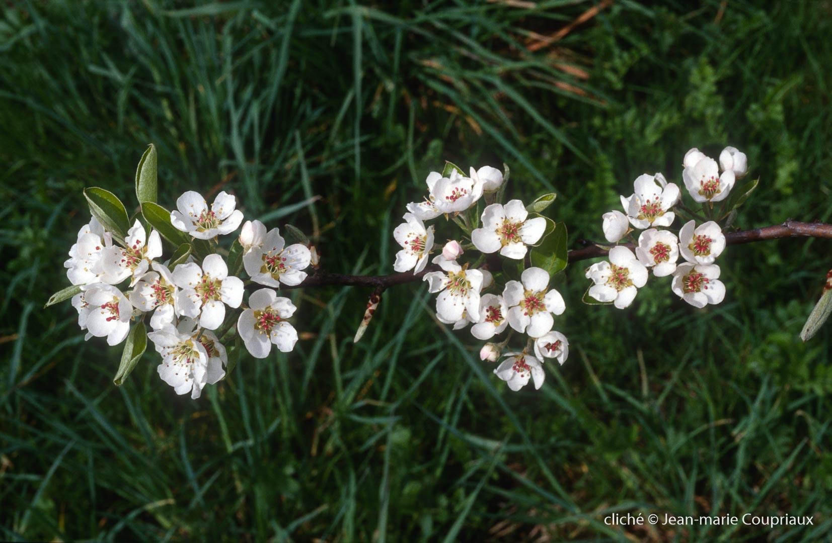 Fleurs-div-177.jpg