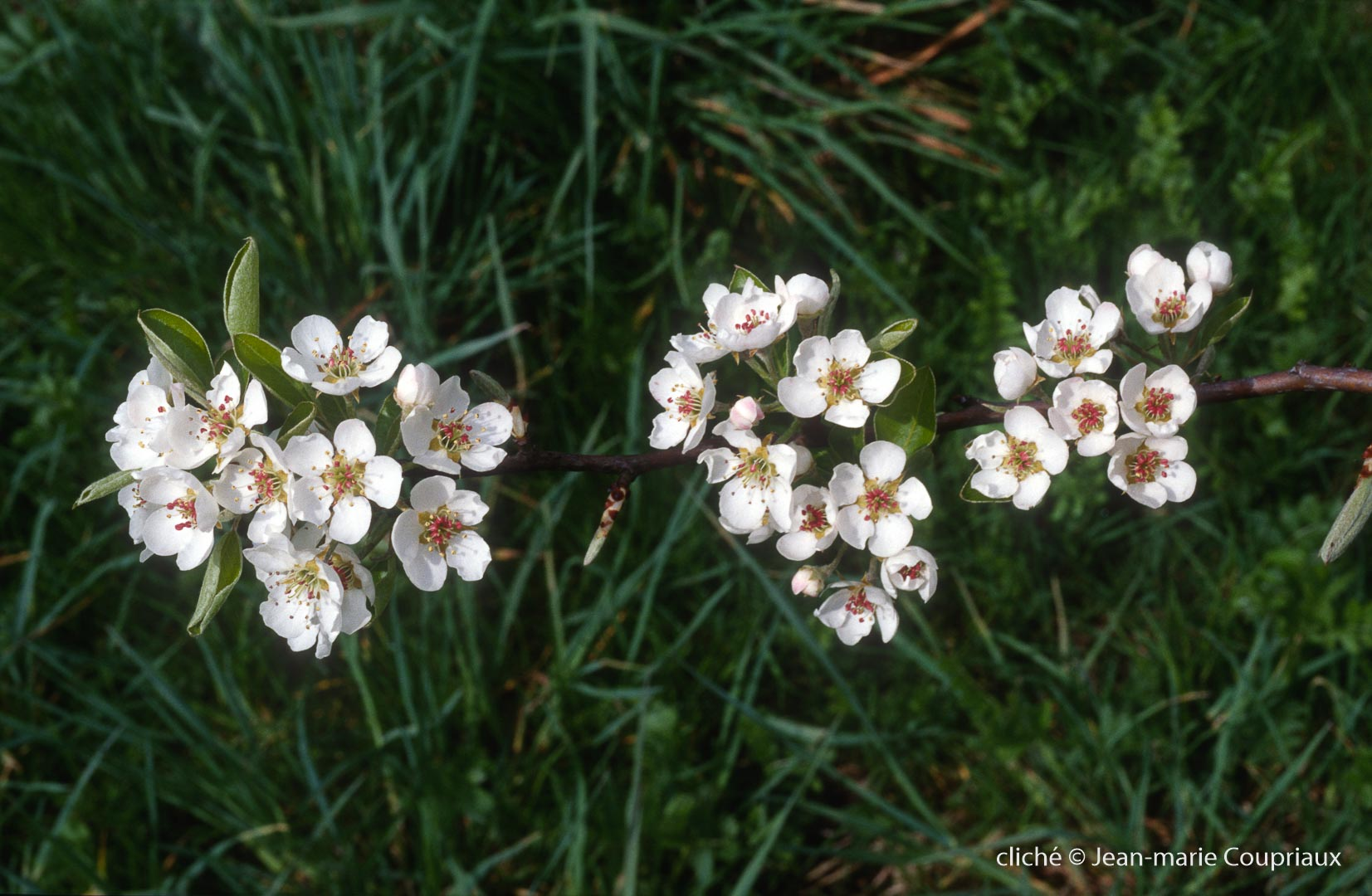 Fleurs-div-177