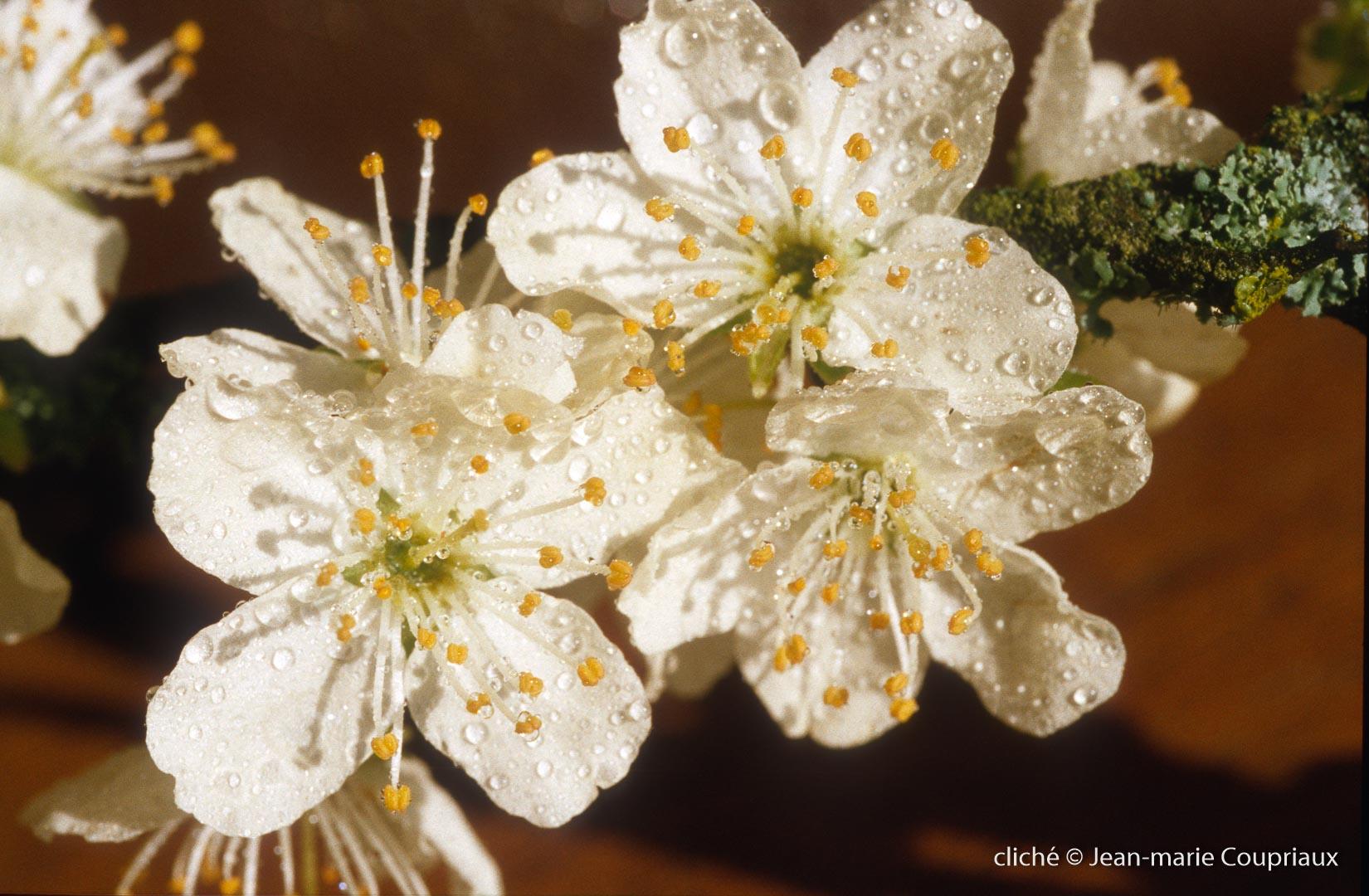 Fleurs-div-181