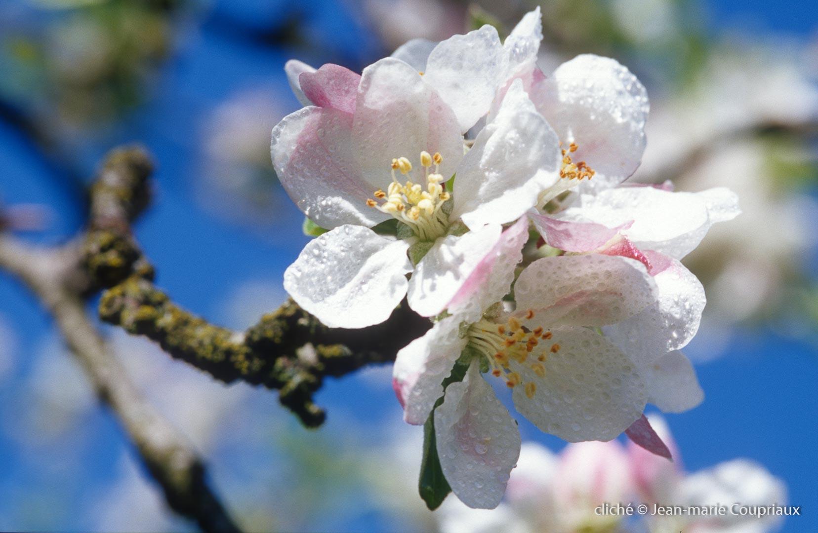 Fleurs-div-182.jpg