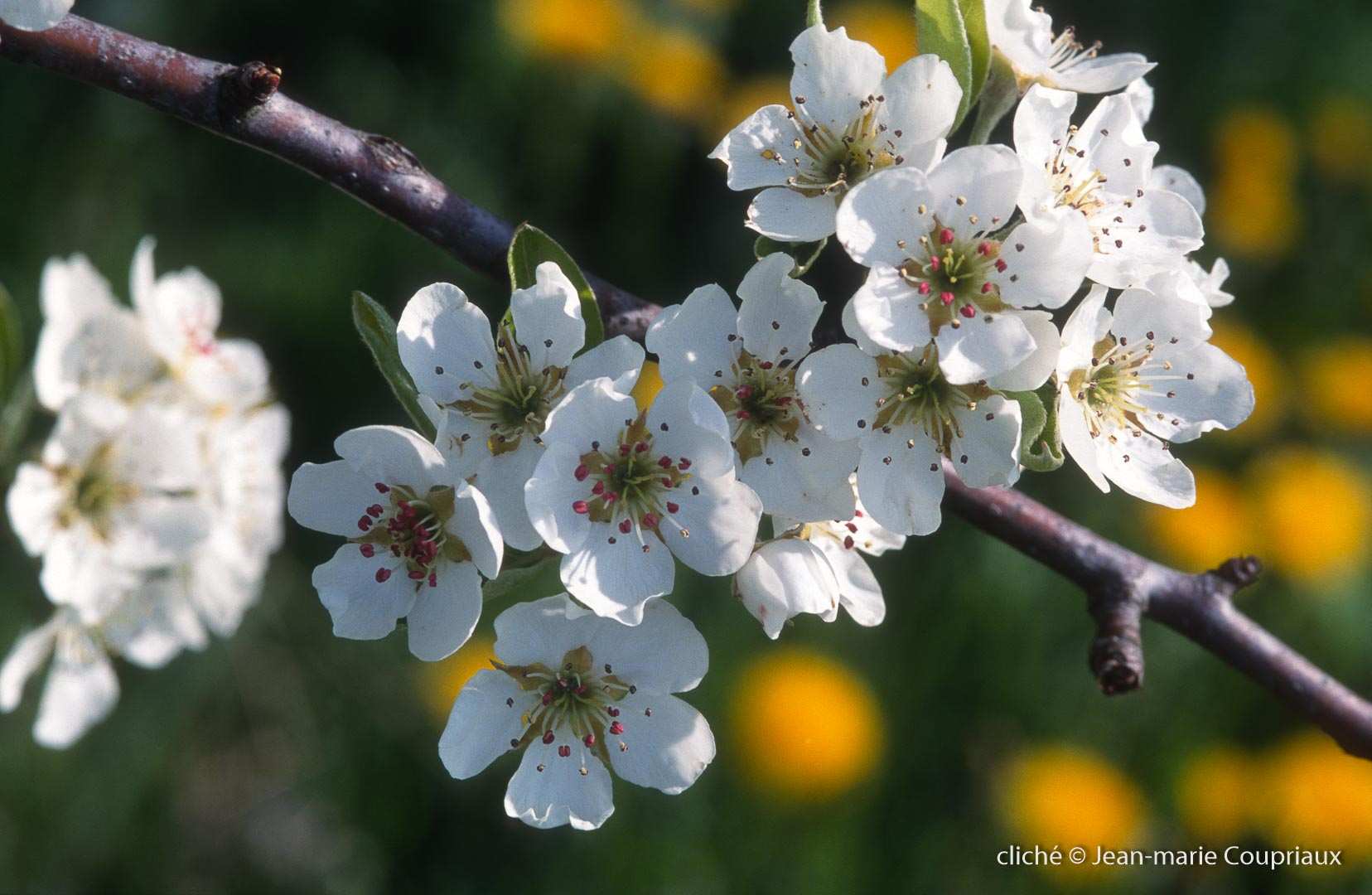 Fleurs-div-184.jpg