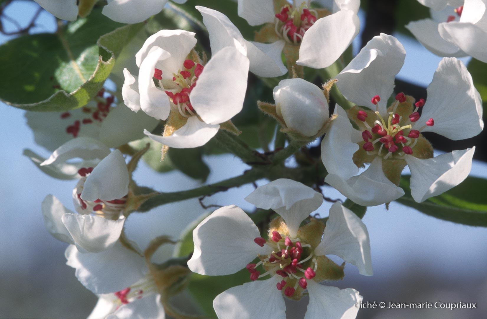Fleurs-div-186.jpg