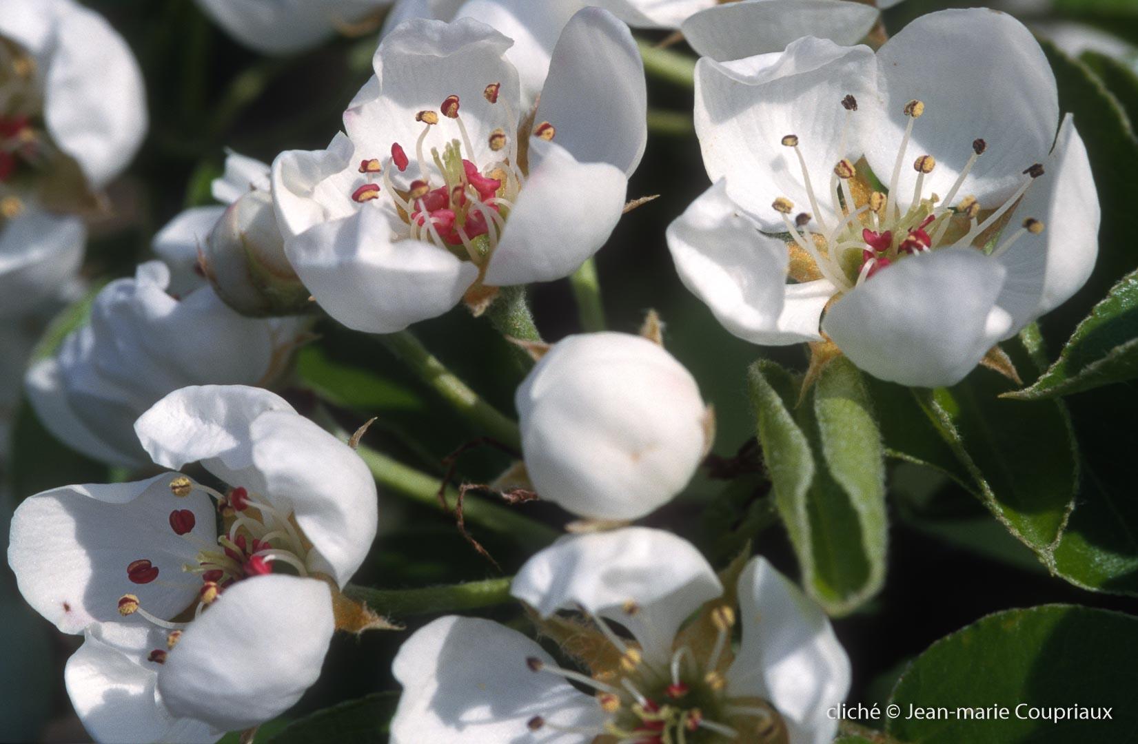 Fleurs-div-187.jpg