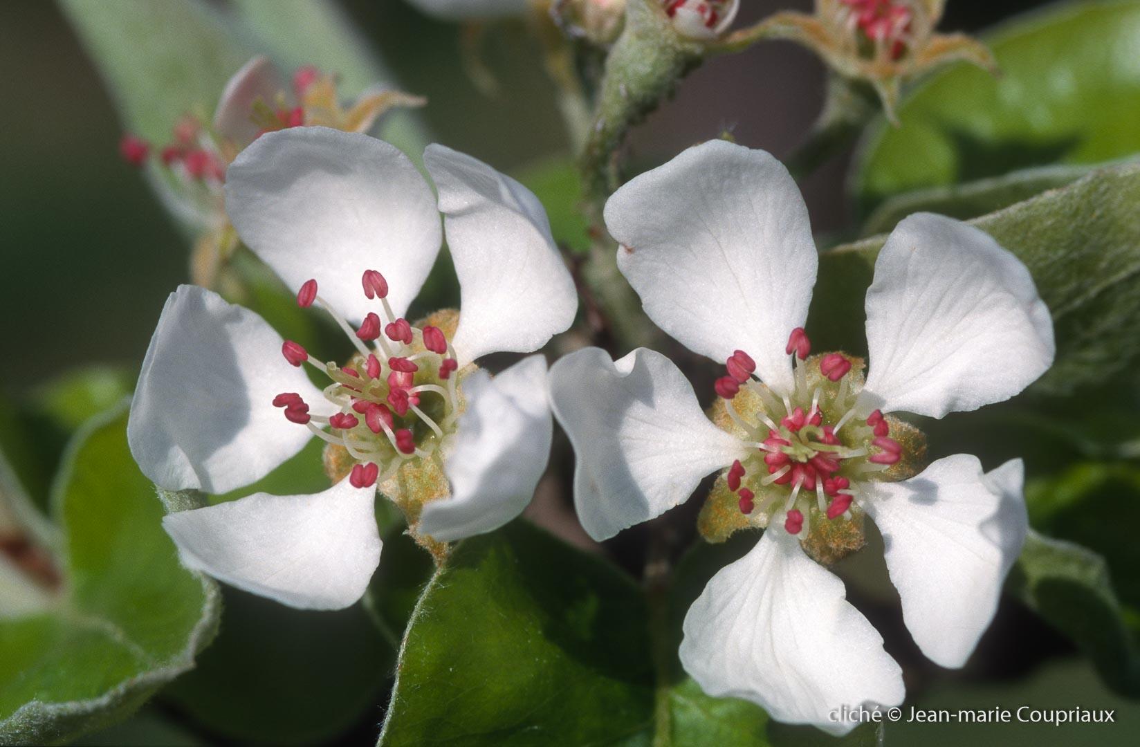 Fleurs-div-188.jpg
