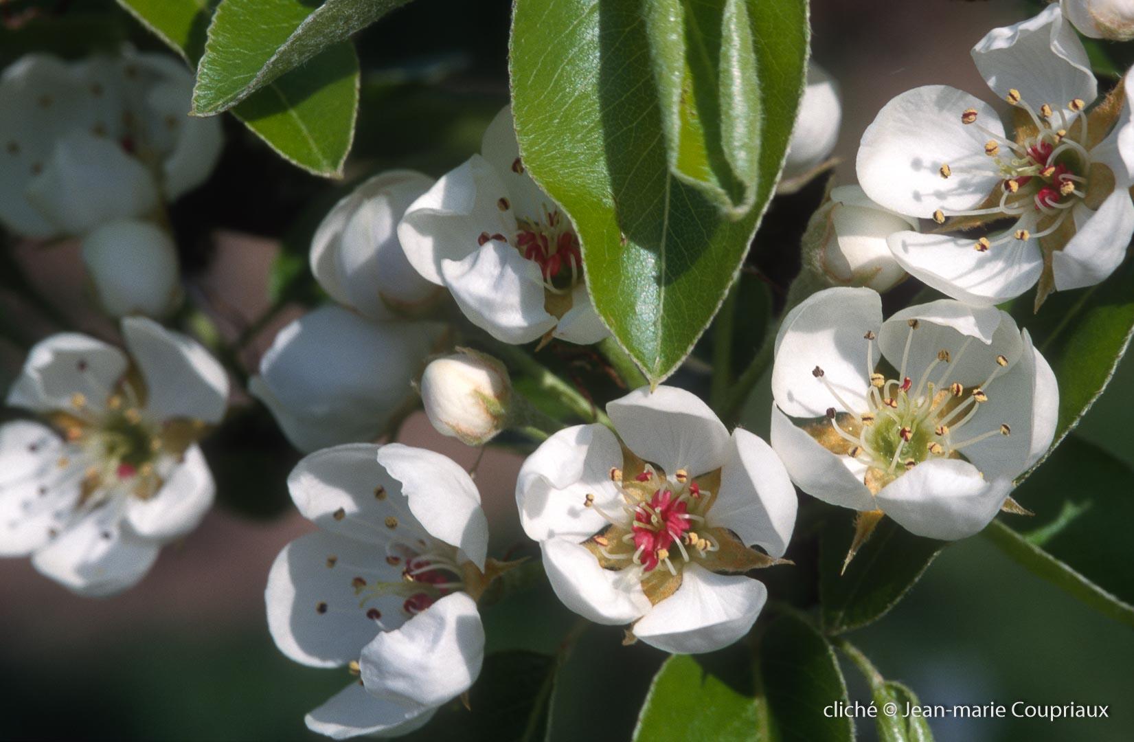 Fleurs-div-189
