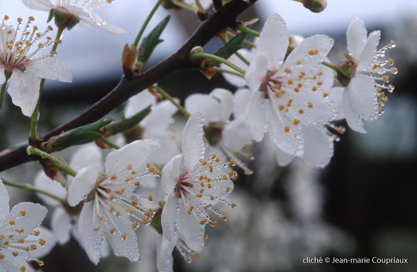 Fleurs-div-191.jpg