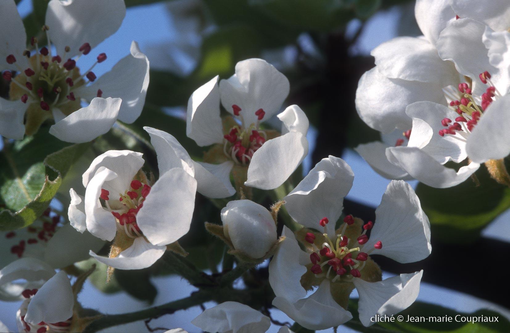 Fleurs-div-192