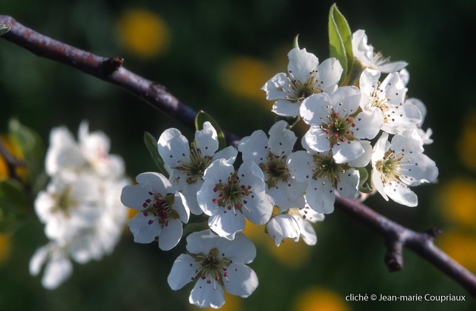 Fleurs-div-193.jpg