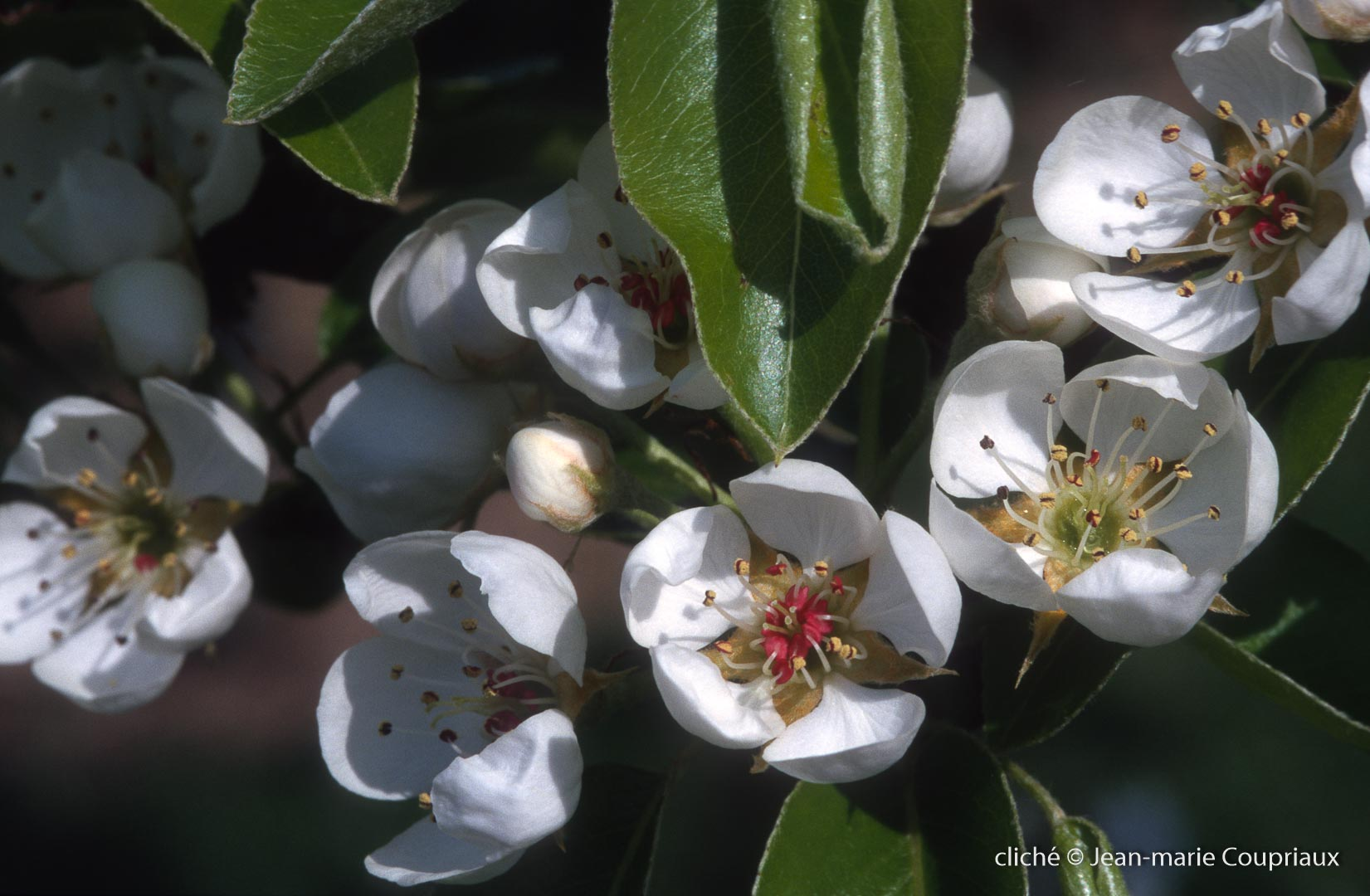 Fleurs-div-194.jpg