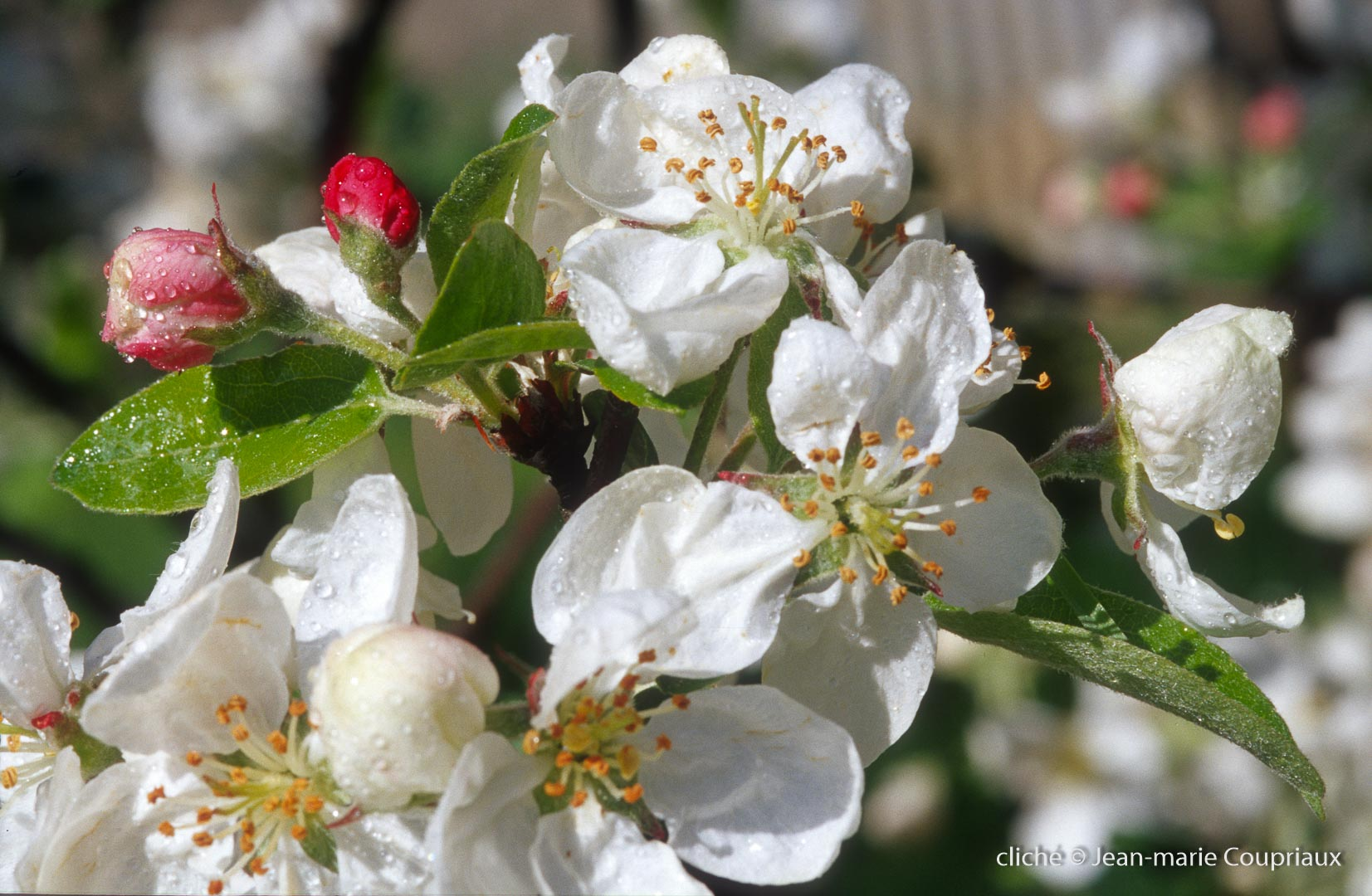 Fleurs-div-195.jpg