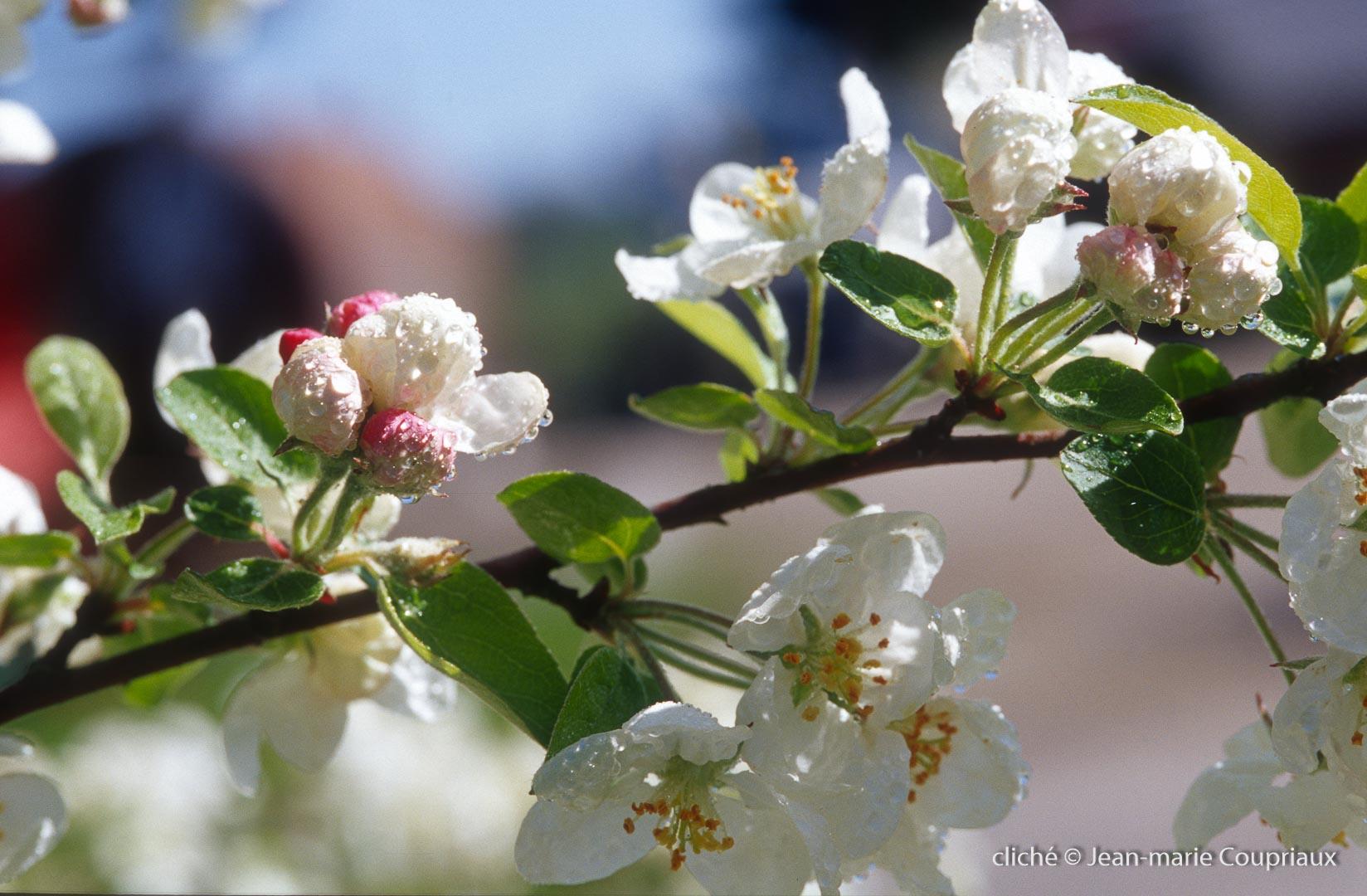 Fleurs-div-196
