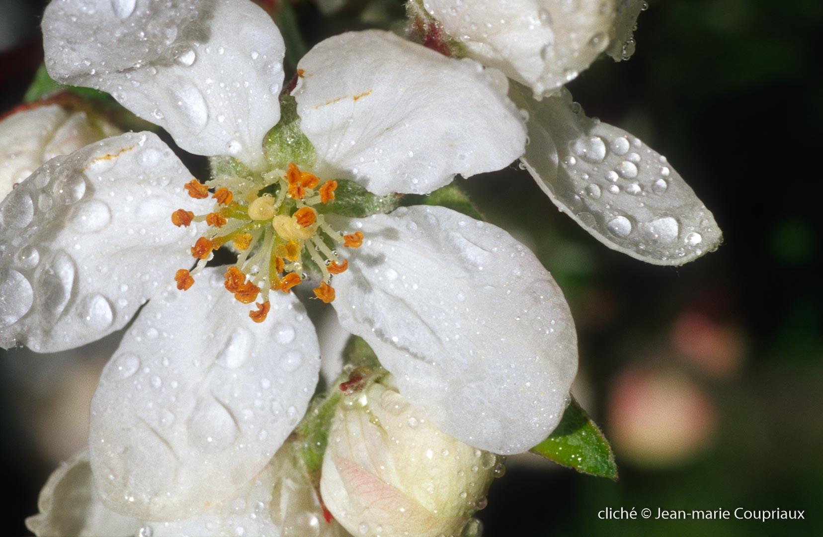 Fleurs-div-198.jpg
